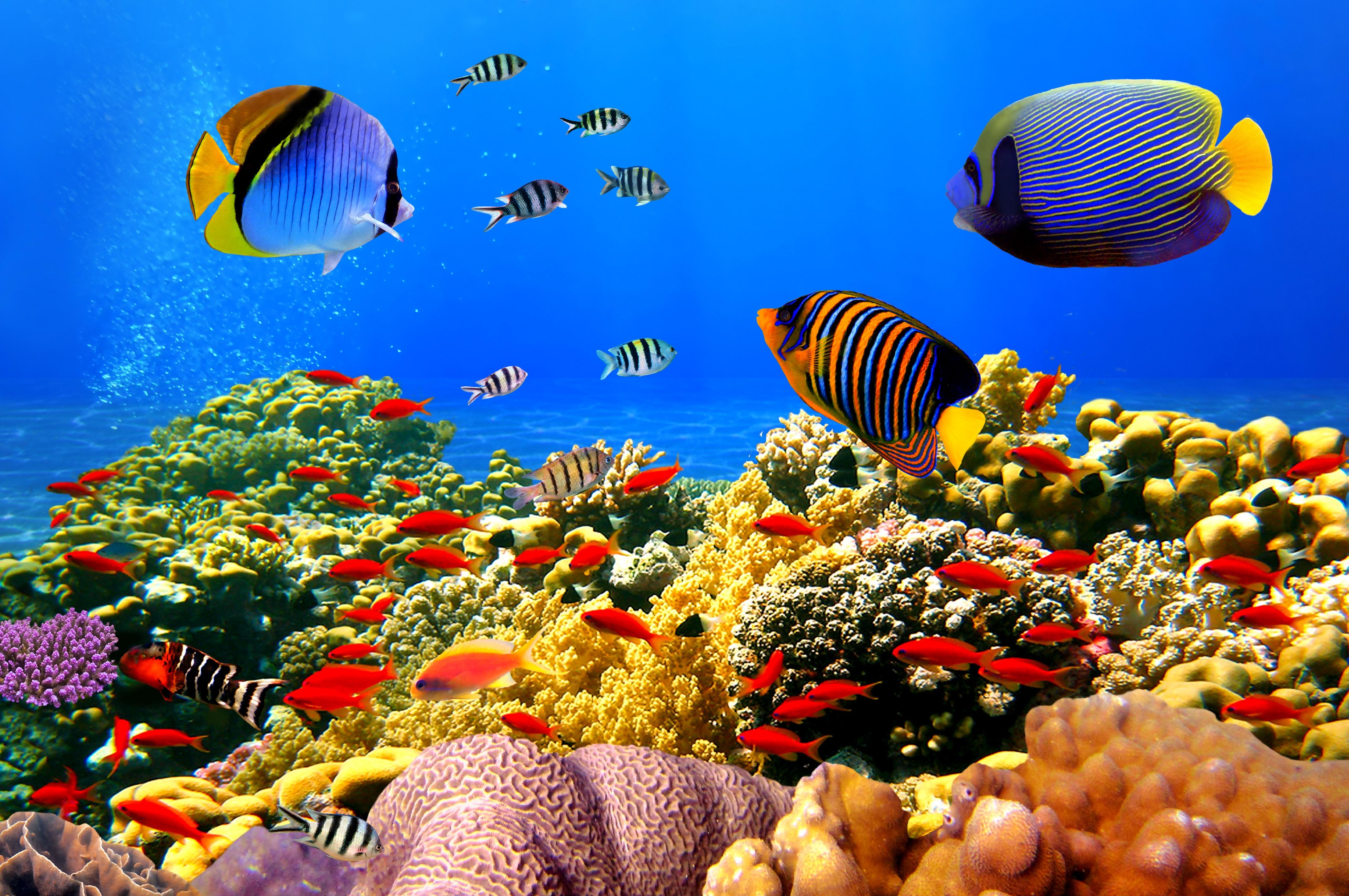 картинки дна океана с рыбками эти
