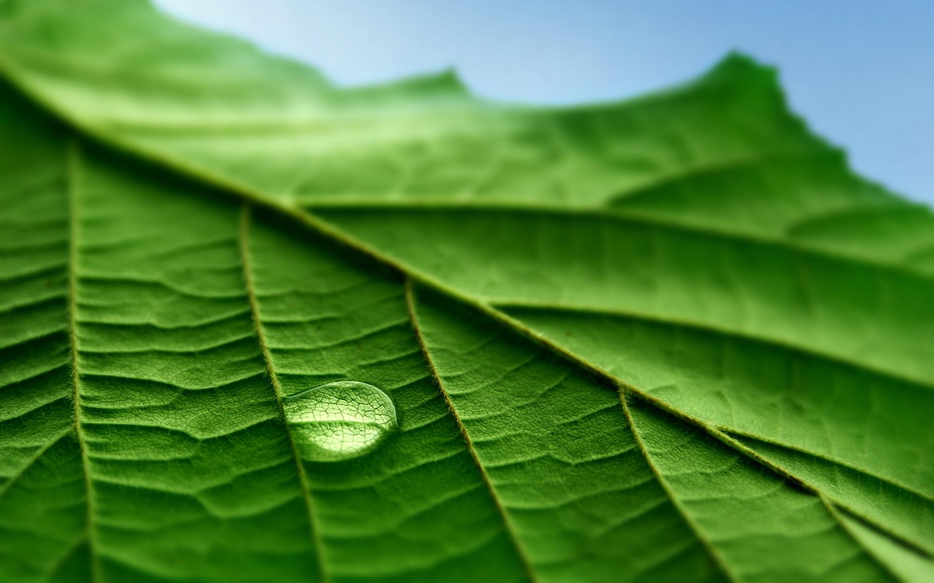 вижу макро фото листьев молодого побега первые