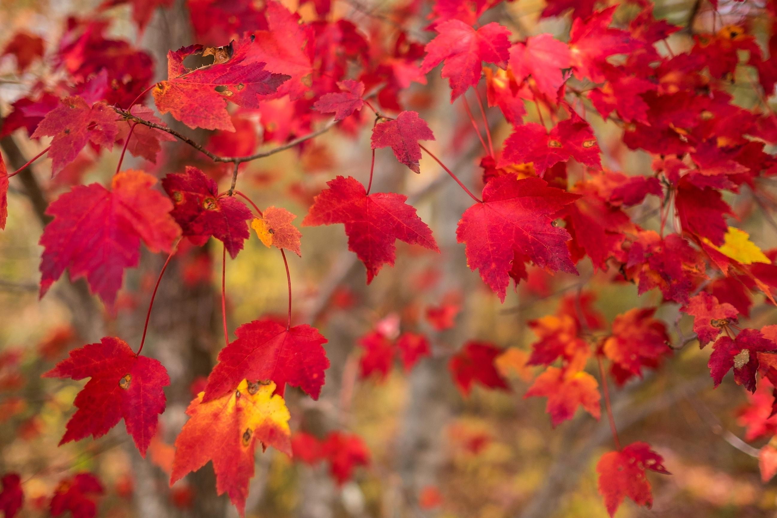 Днем, лучшие картинки на рабочий стол широкоформатные осень наступила