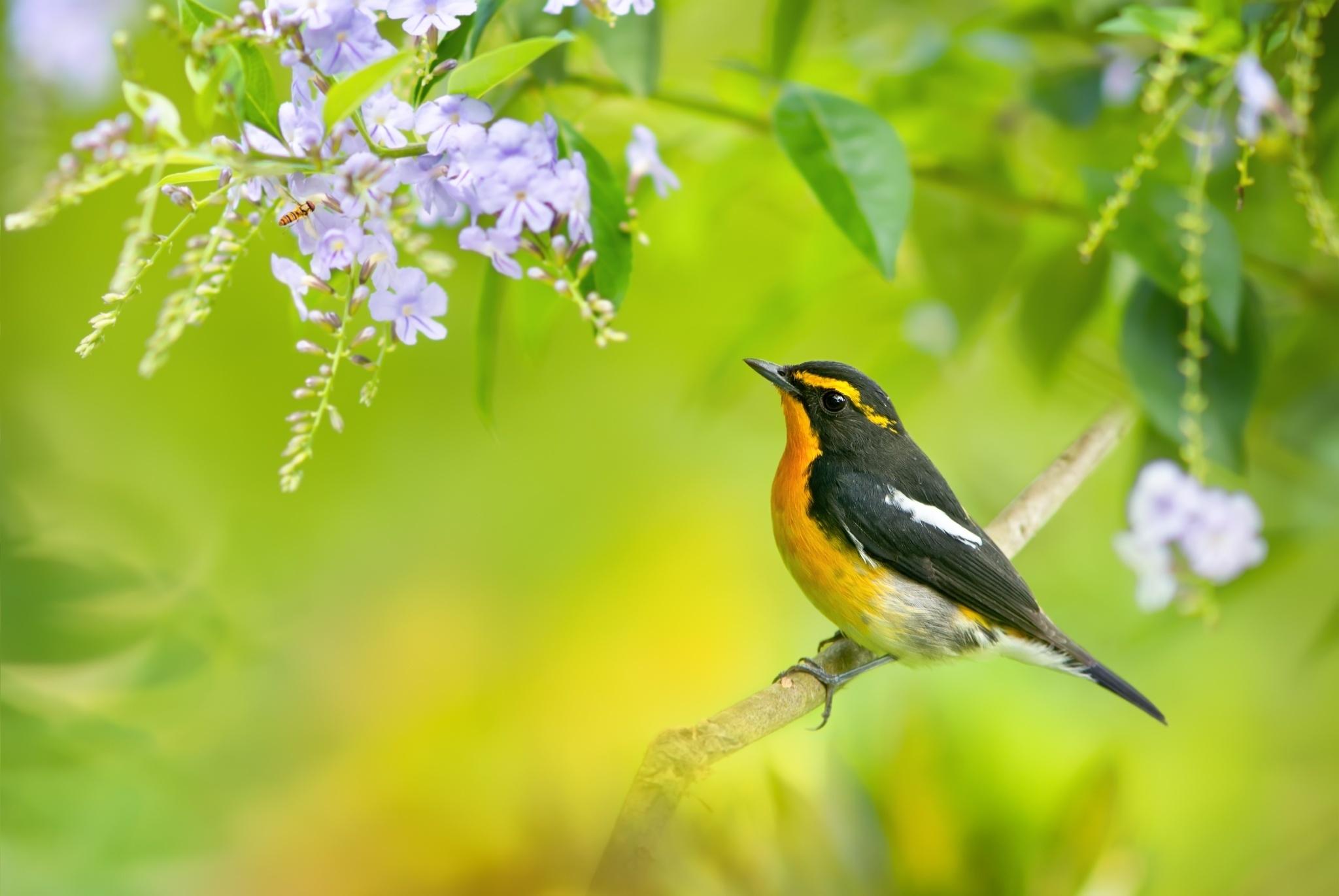 природа птица ветка бесплатно