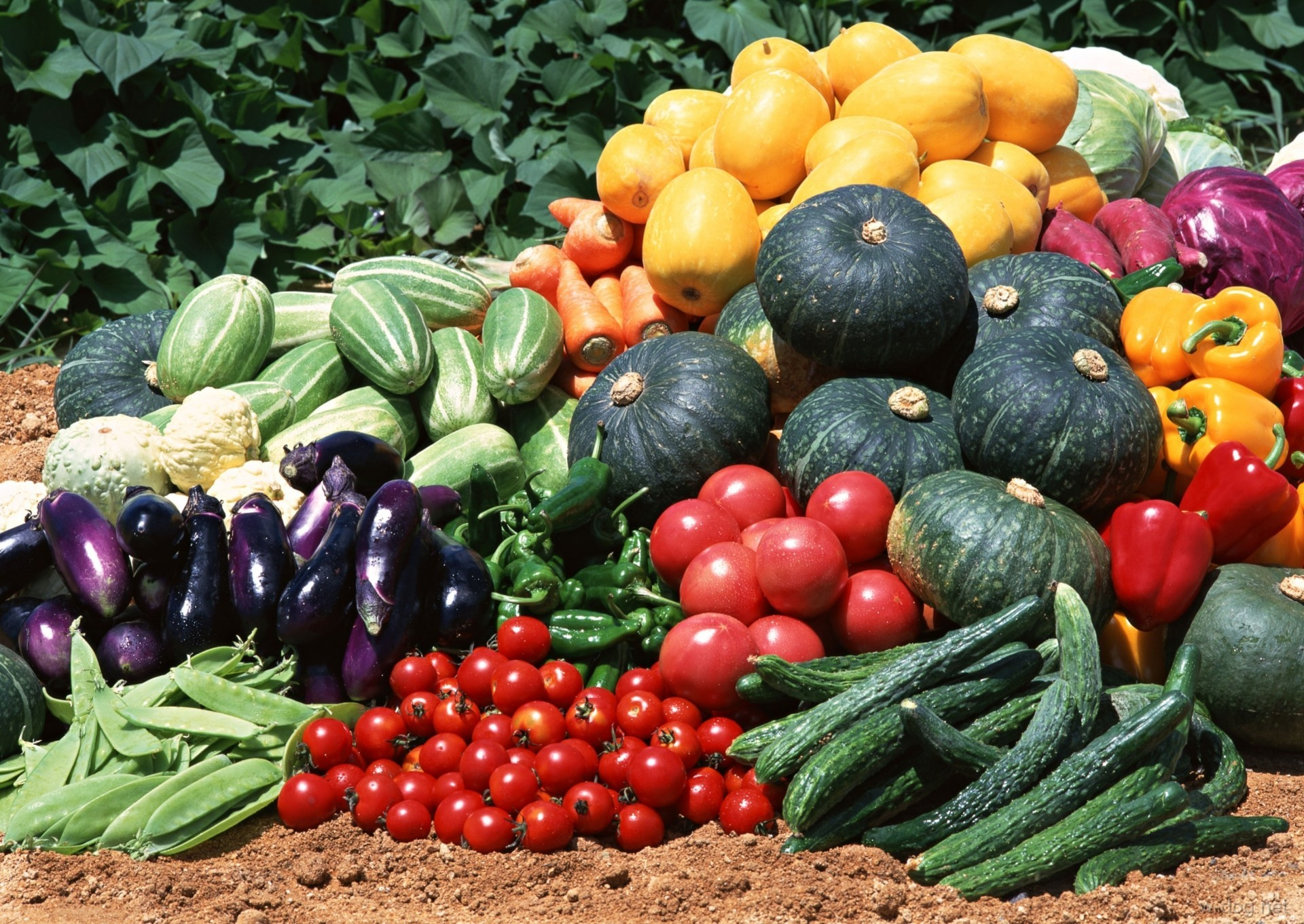 Смешные гифки, картинки грядки с овощами
