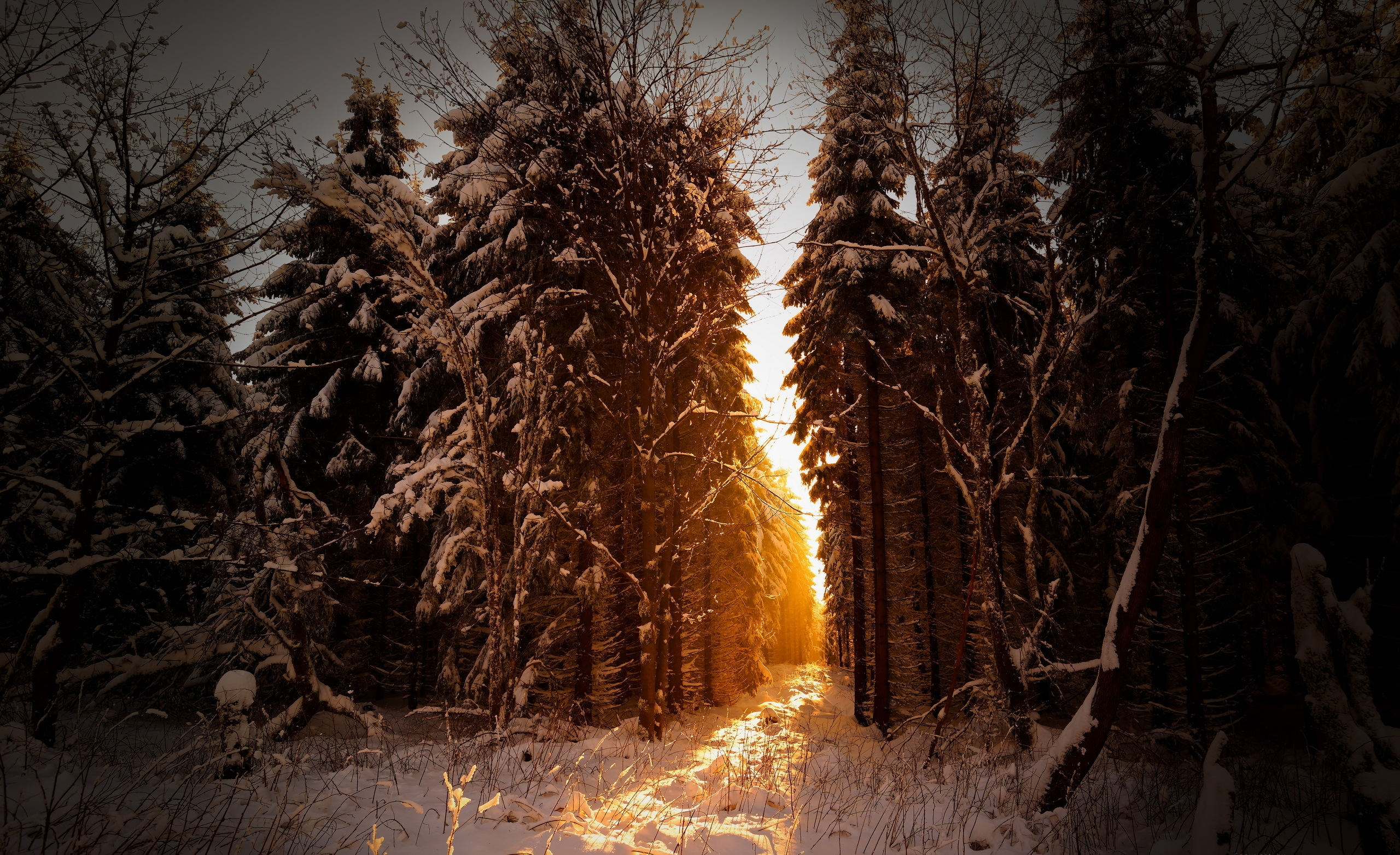 снег зима лучи деревья snow winter rays trees без смс