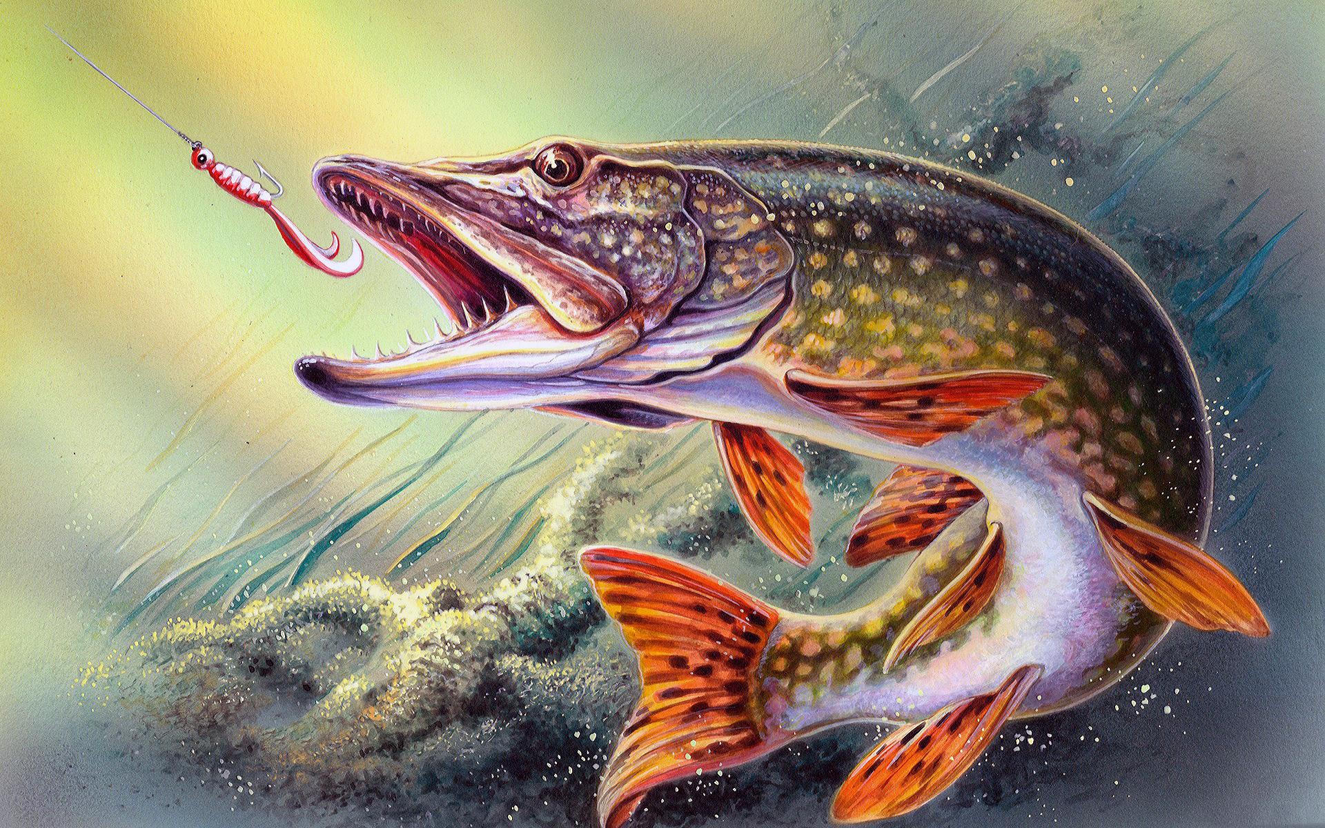 Картинка для детей щука в воде