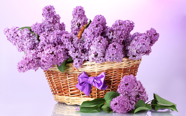 открытка весенние цветы фото так ведут