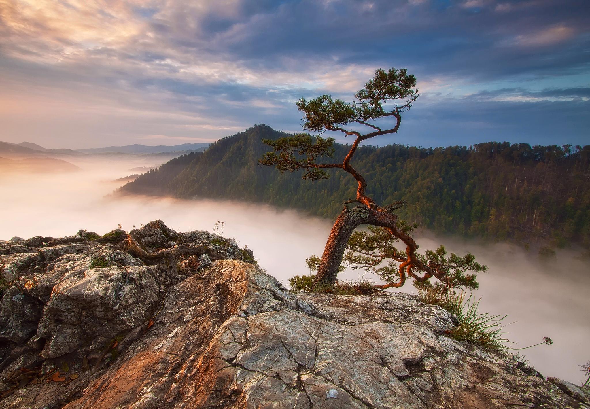 скалы обрыв деревья загрузить