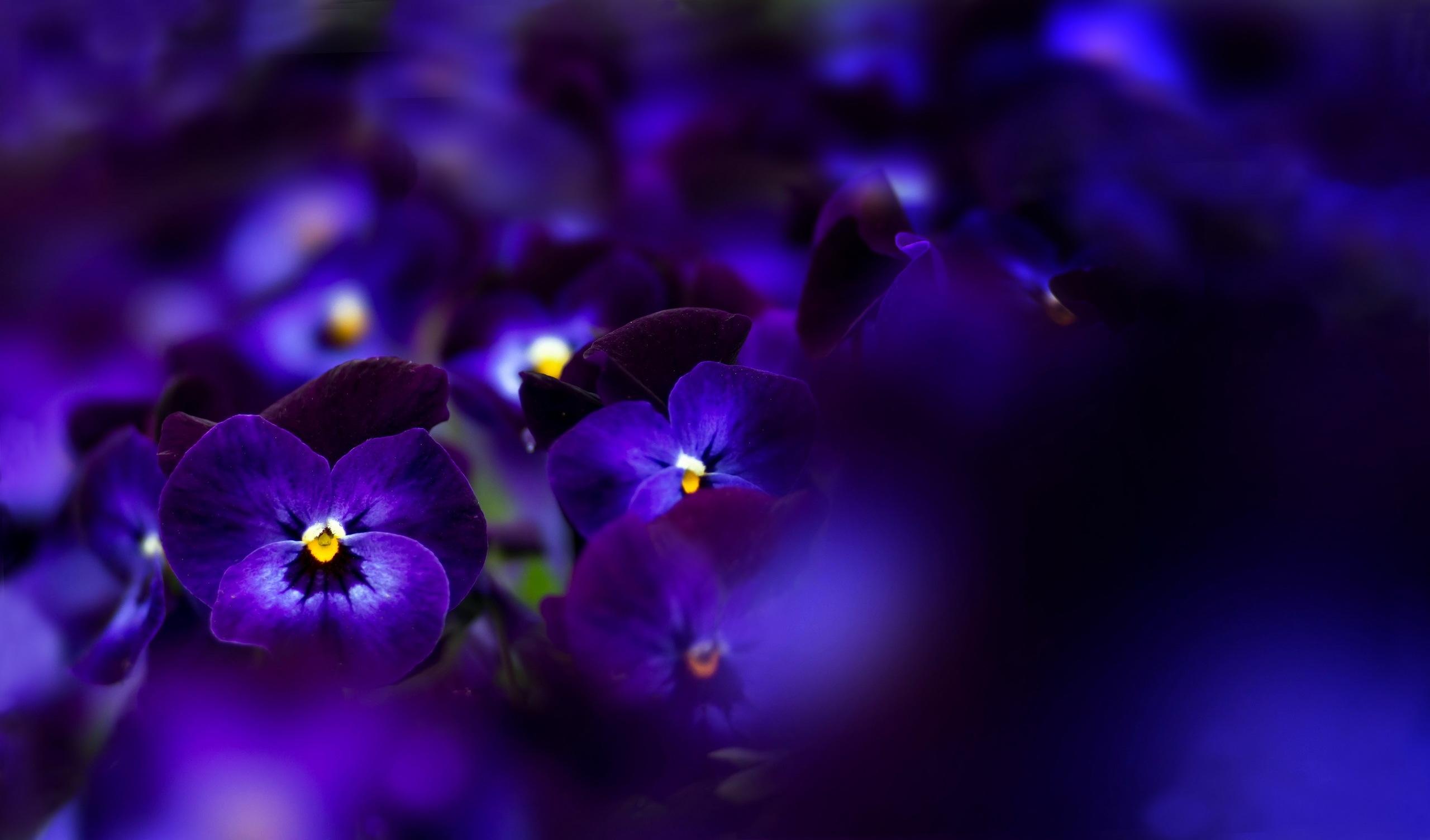 Картинки фиолетовые обои цветы