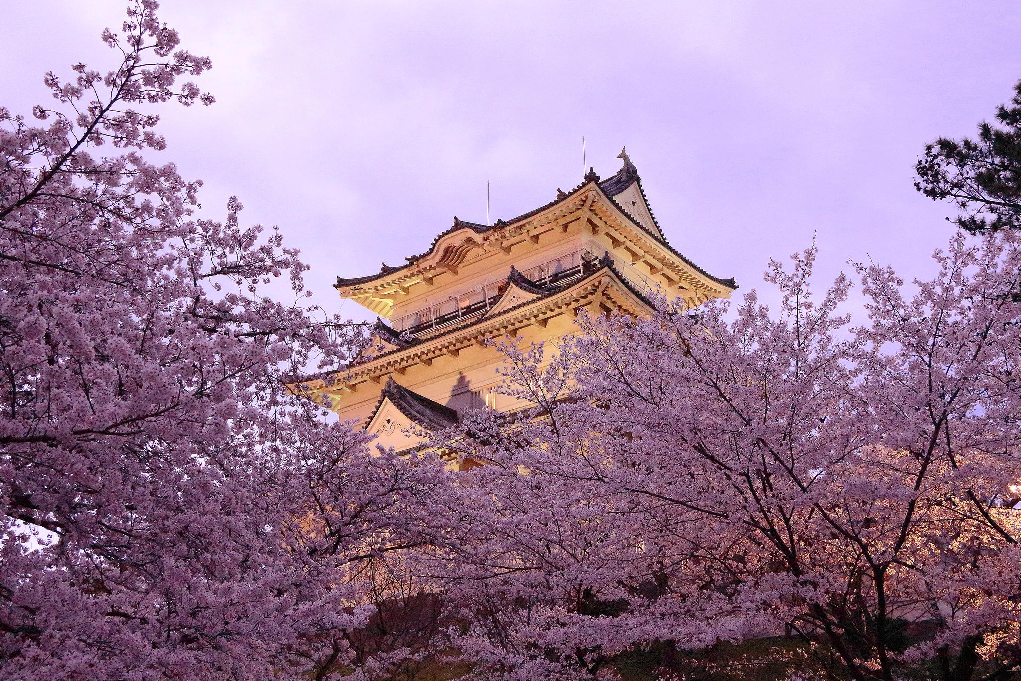 Японская картинка сакура, декупаж открытки