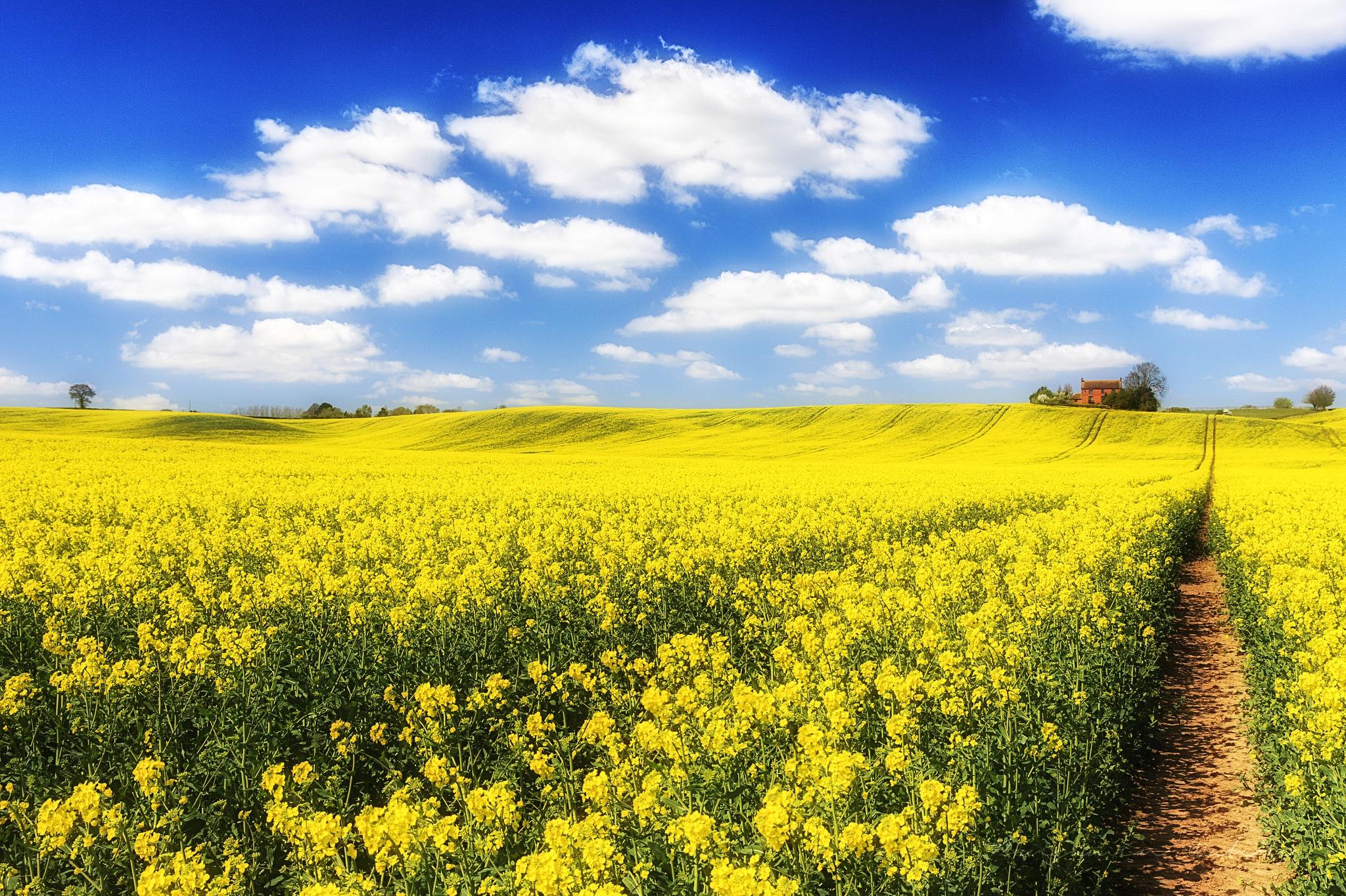 желто-зеленая дорога в степи  № 252757 без смс