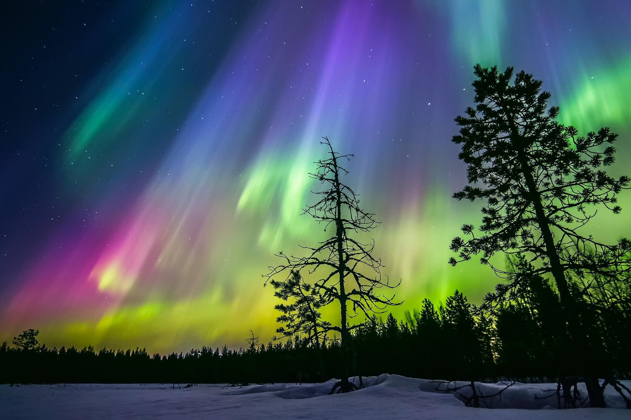 природа северное сияние деревья зима снег дорога nature North lights trees winter snow road загрузить