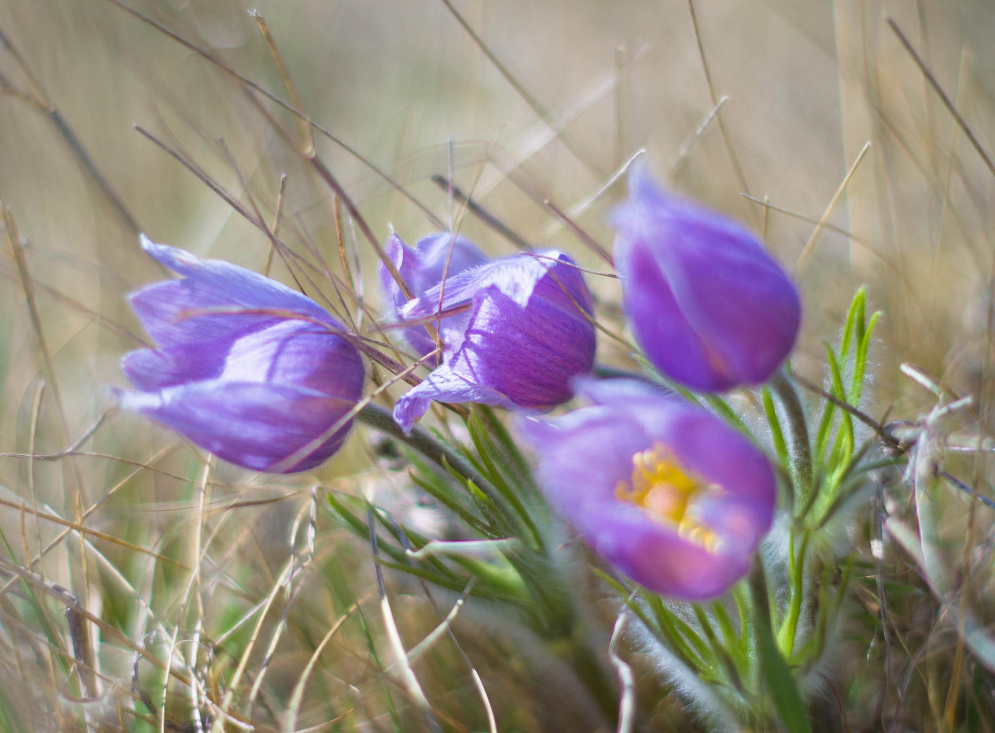 Сонник фото с цветами