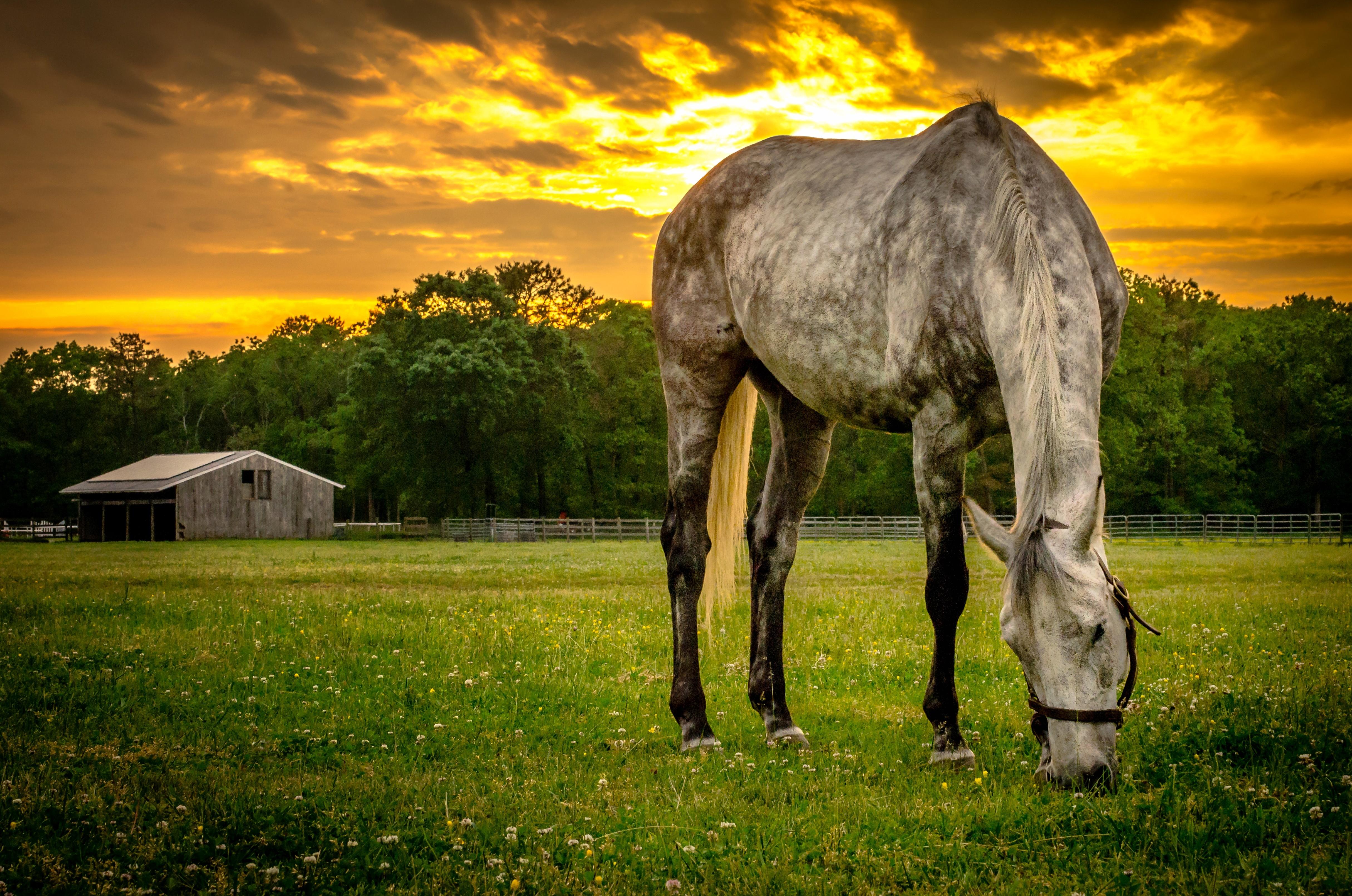 лошадь, трава, закат  № 2719 без смс
