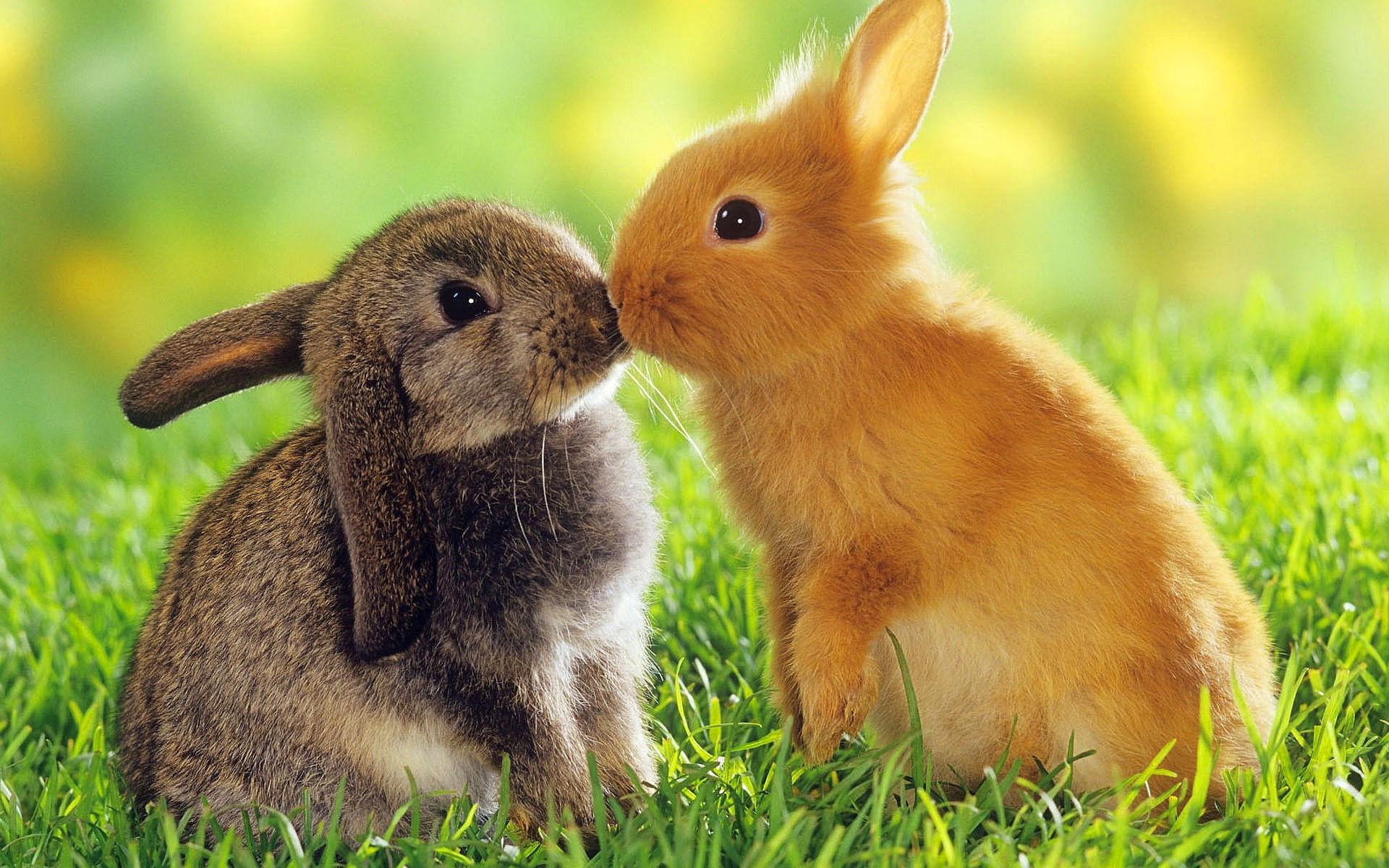 кролик трава  № 1963977  скачать