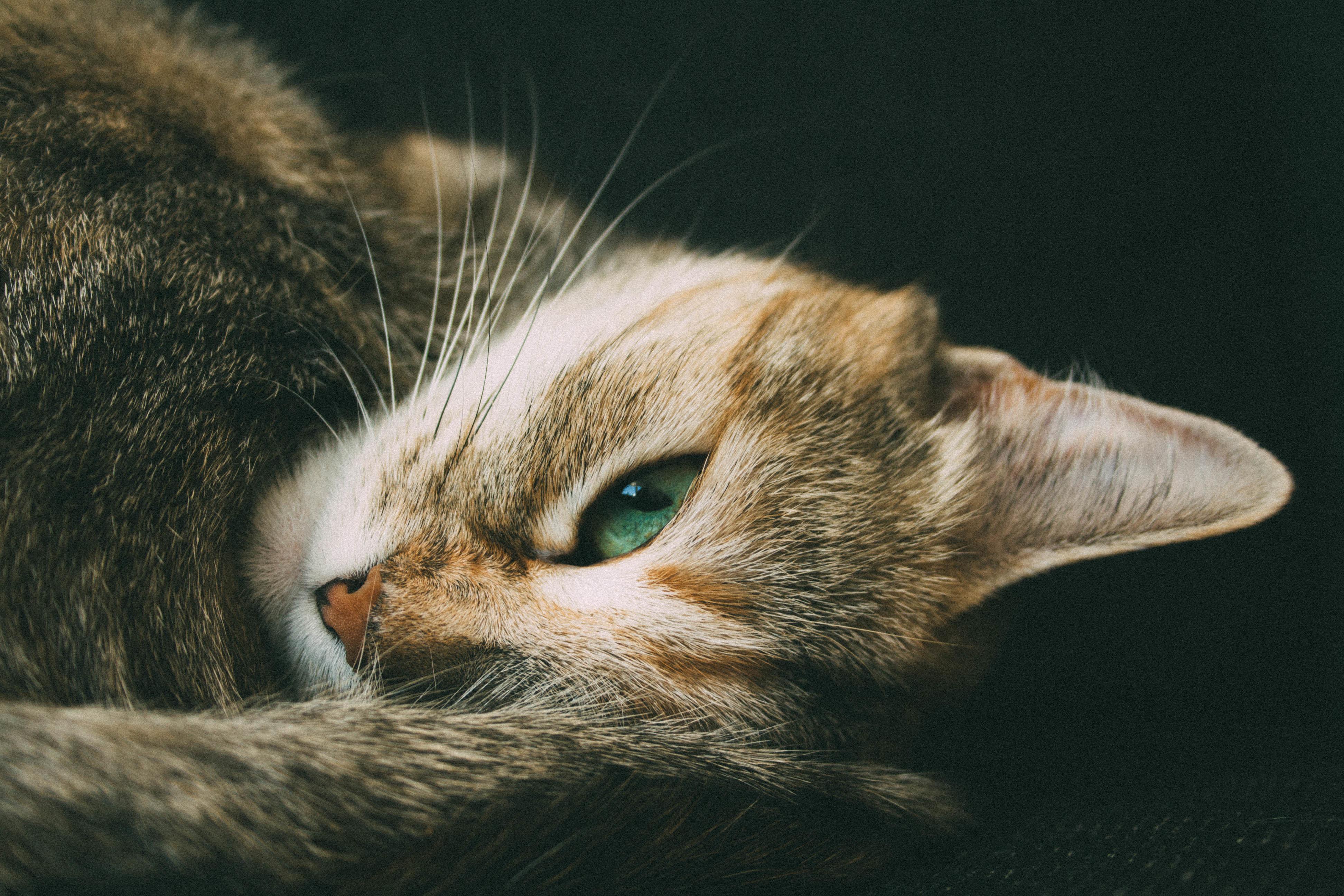 кошки с зелеными глазами фото попавшим