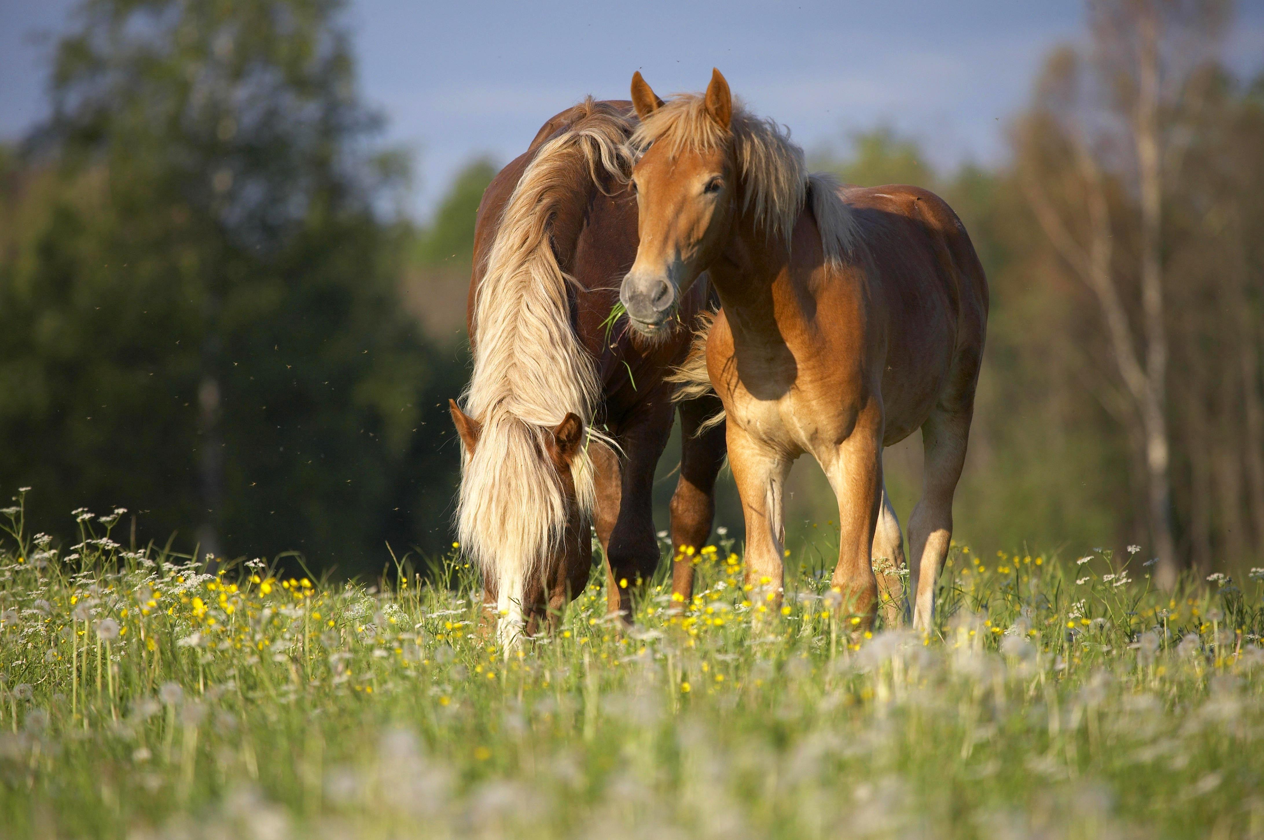 лошадь конь лес поляна  № 99112 без смс