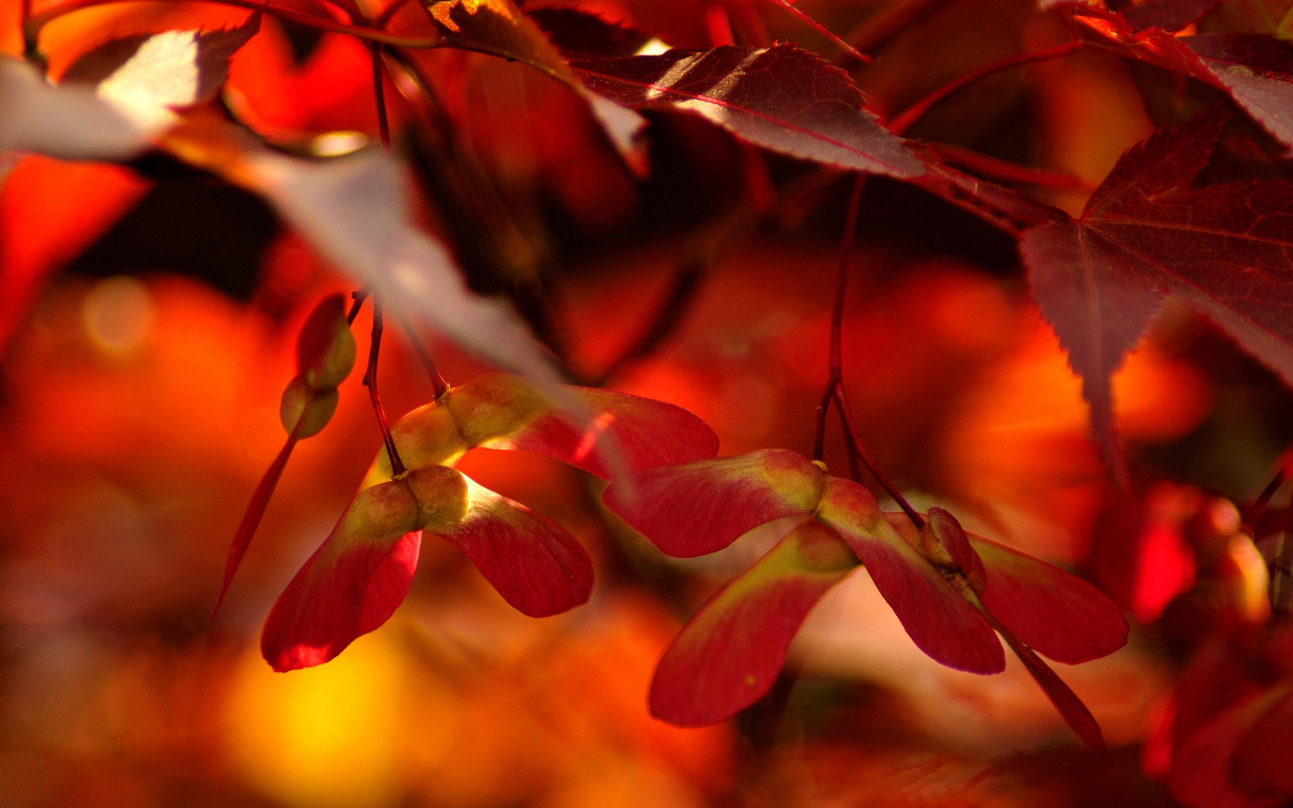 действительно находился картинки на телефон красивые природа осень нее самой света