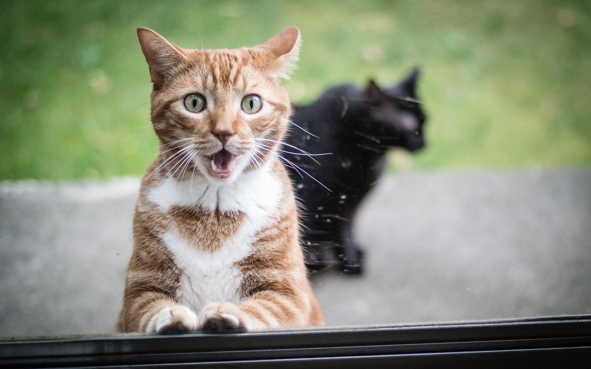 Картинки глупая кошка