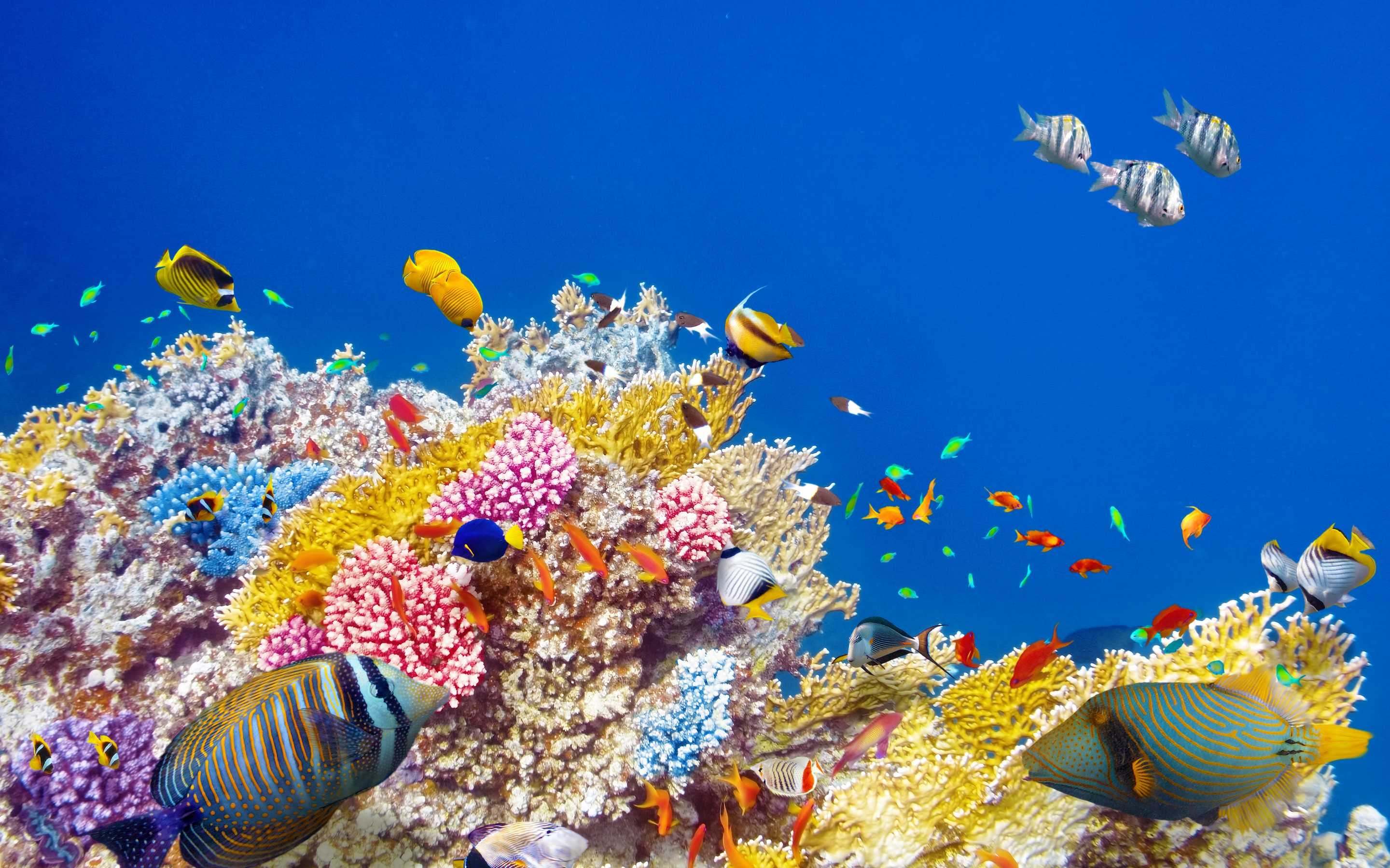 Colorful ocean fish coral