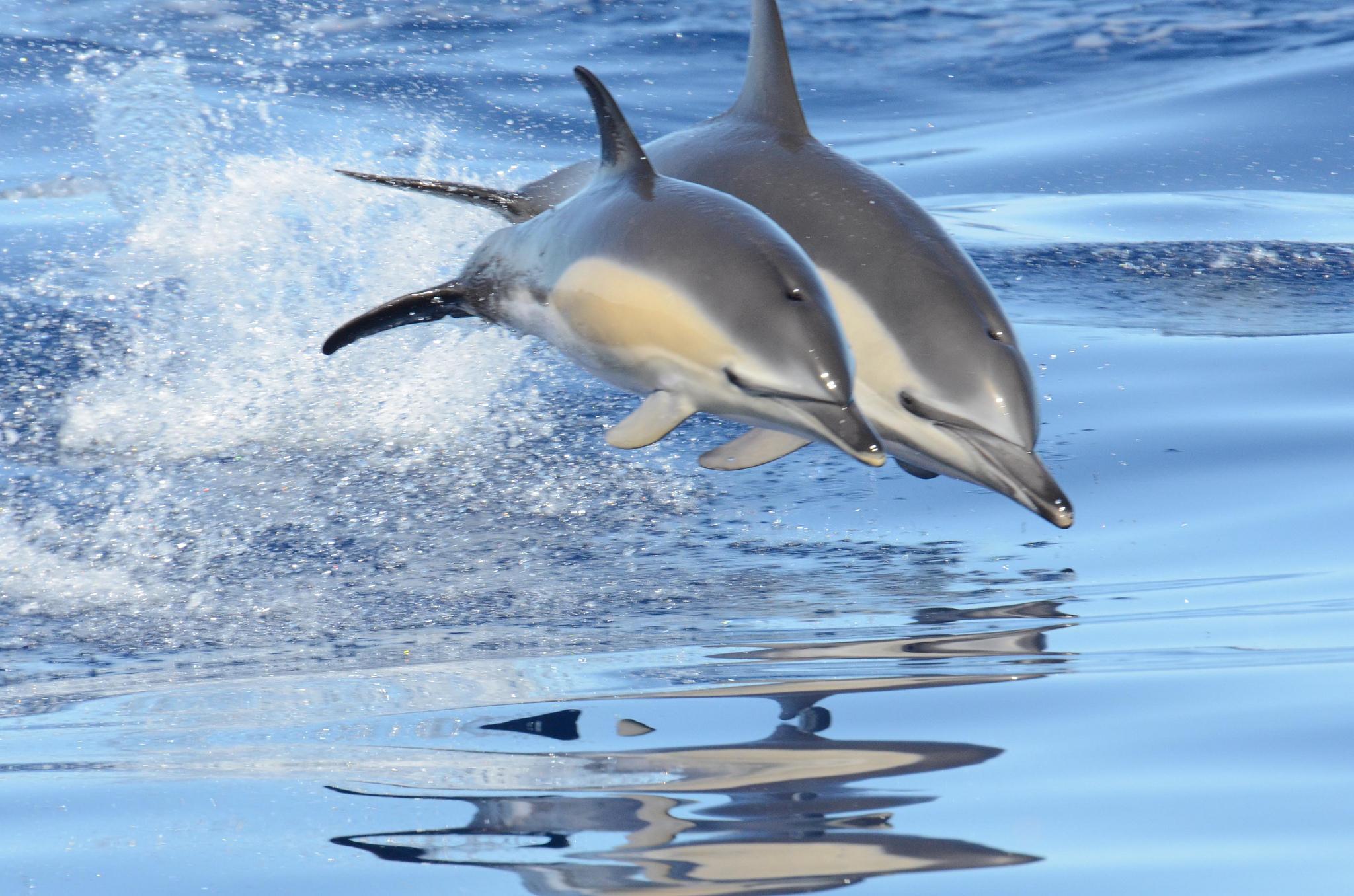 Дельфин прыжок волна скачать