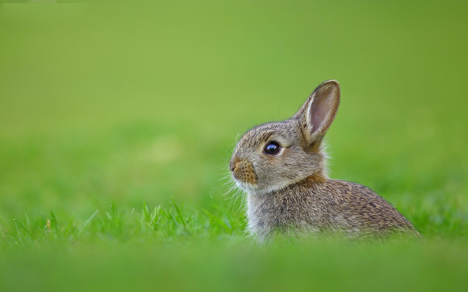 кролик трава  № 1963973 загрузить