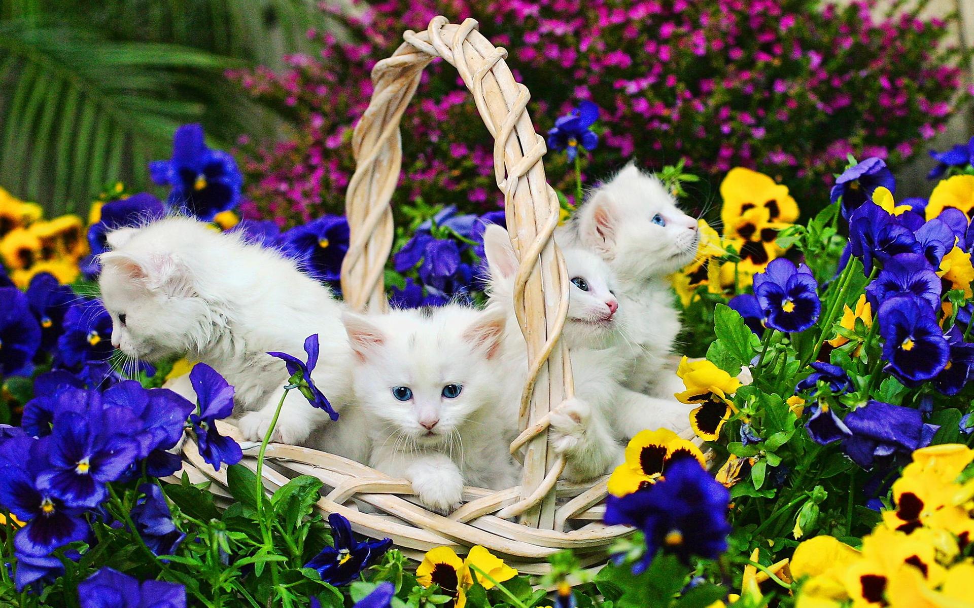 картинка красивой белой кошки в цветах овуляцию фраутест
