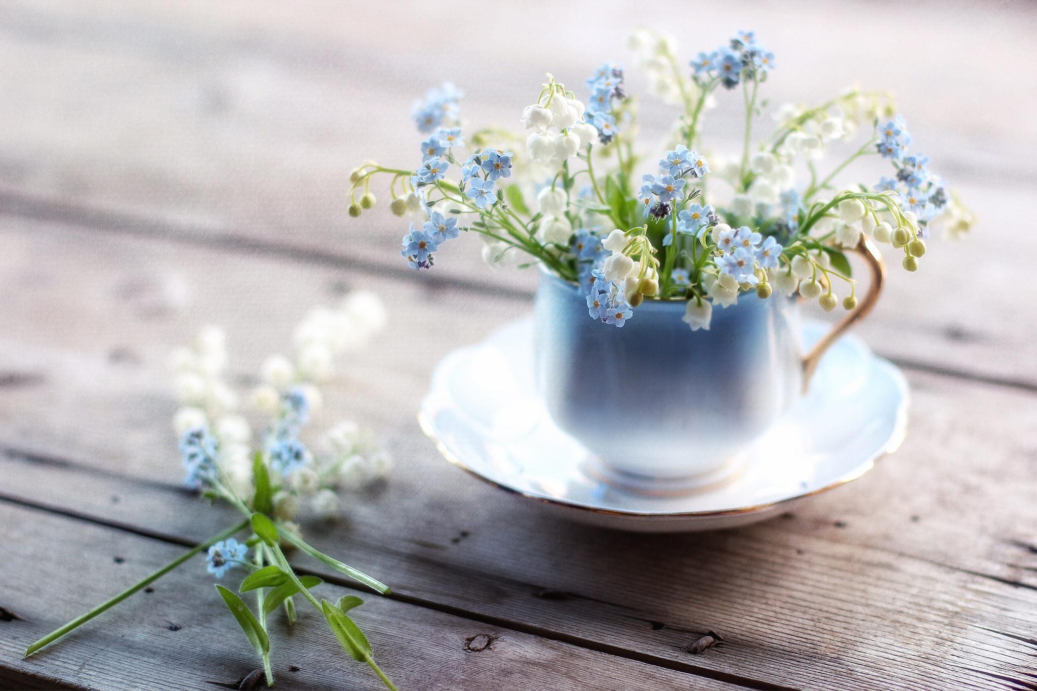 природа цветы чашка  № 1486740 загрузить