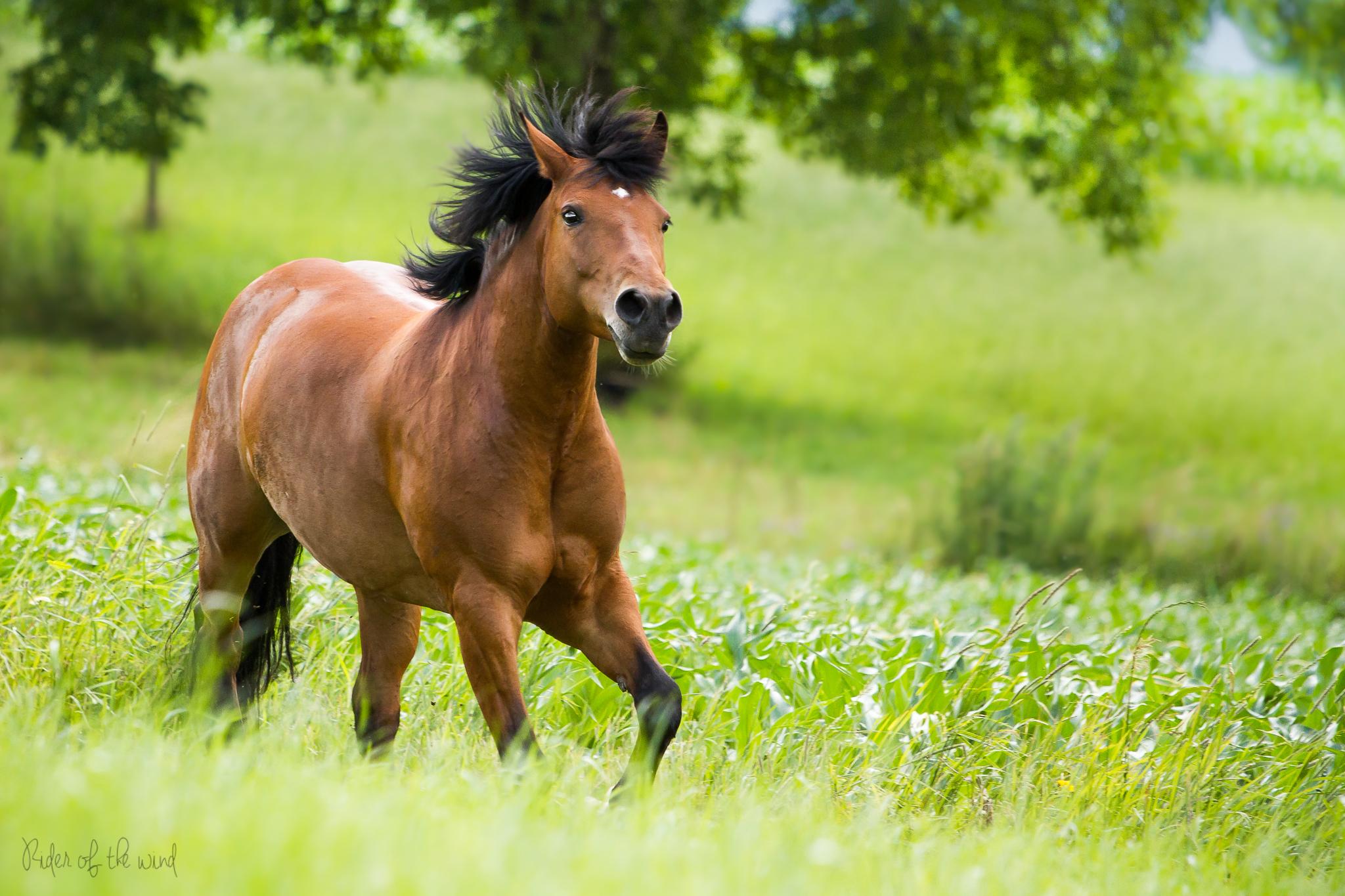 Лошадь картинки большого разрешения