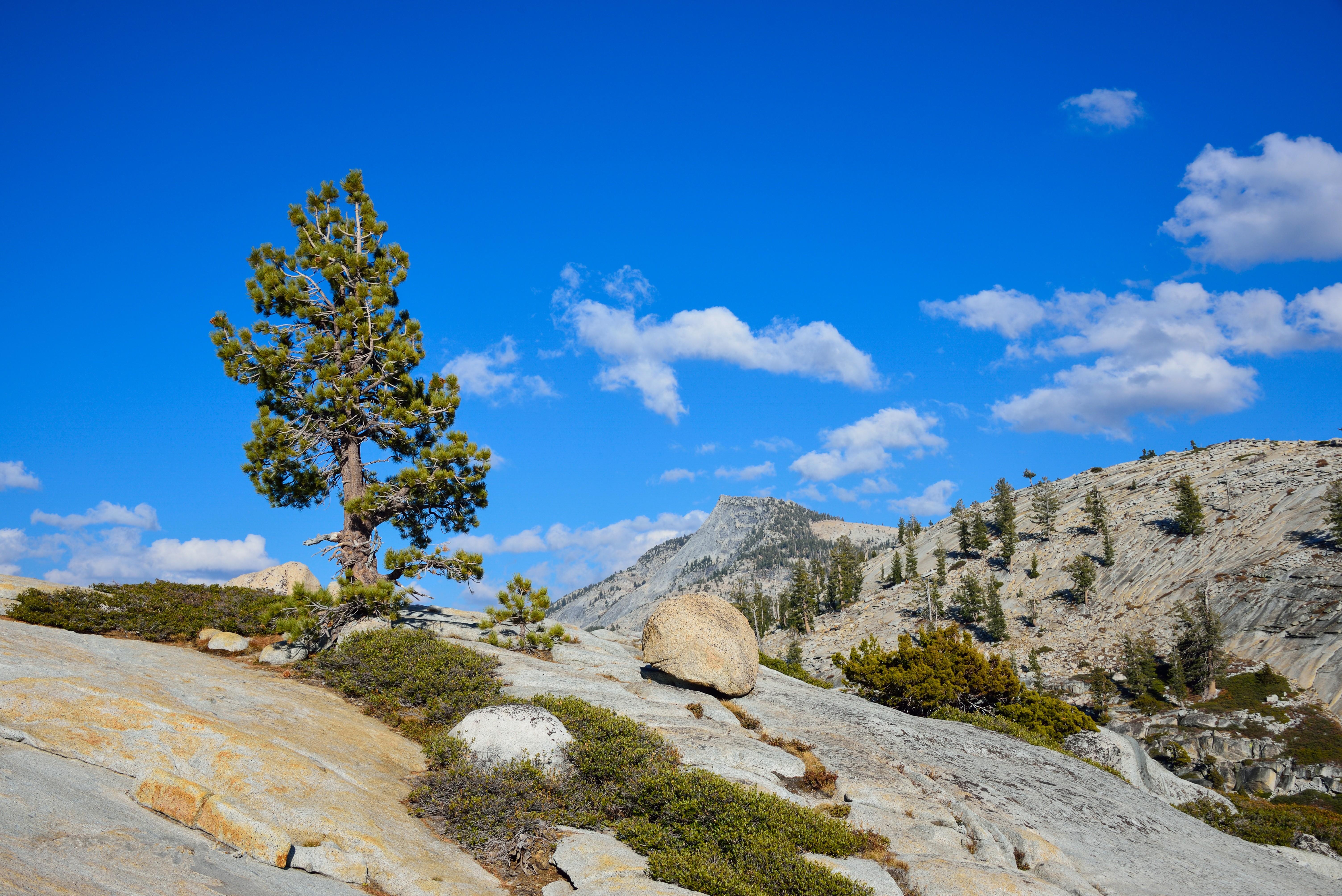 природа горы деревья скалы небо nature mountains trees rock the sky  № 379277  скачать