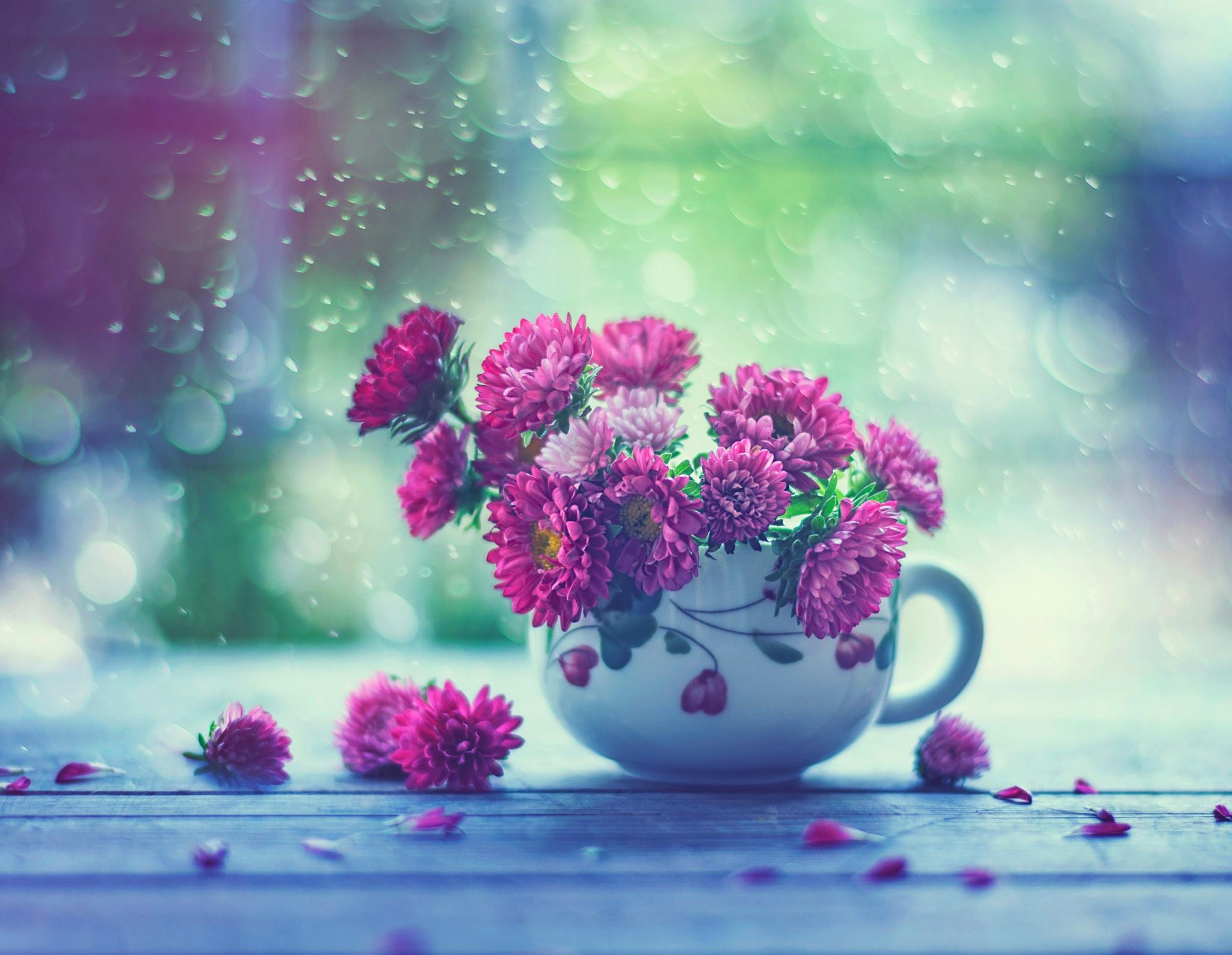 природа цветы чашка  № 1486760  скачать