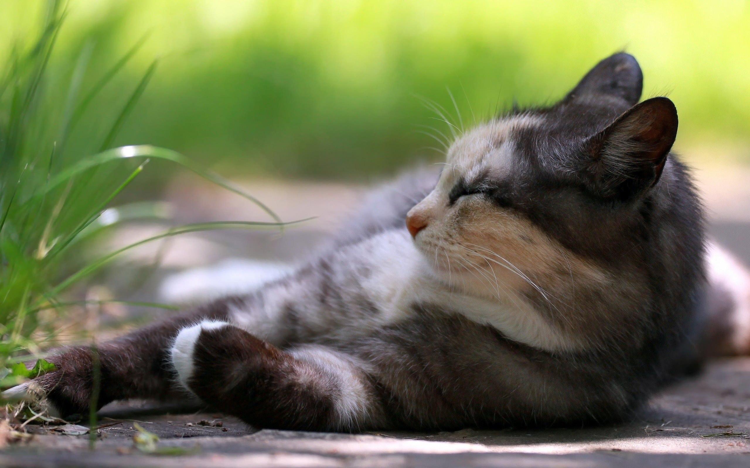 отдыхай котик картинки уверен, что