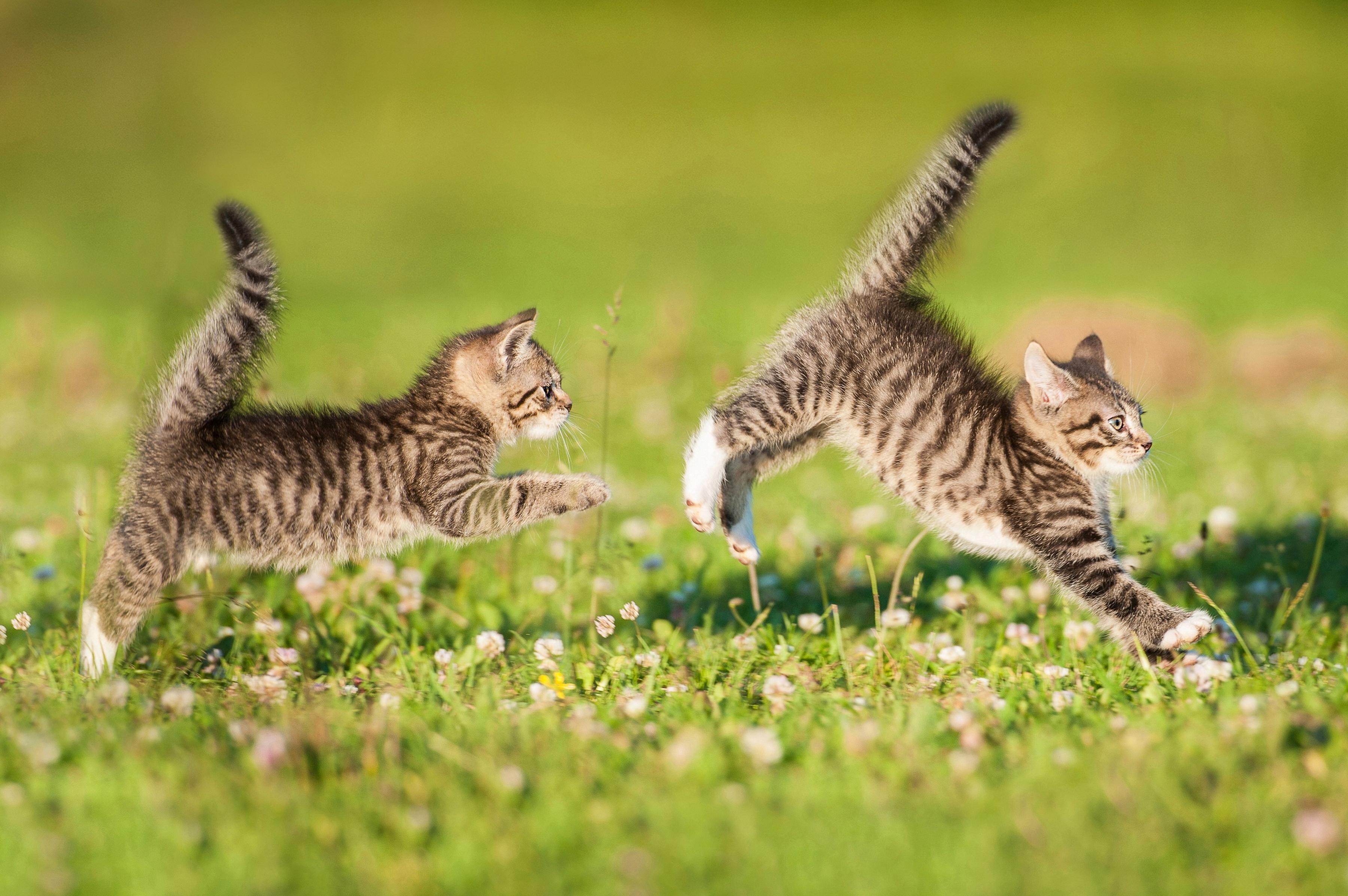 Картинка бегущей кошки