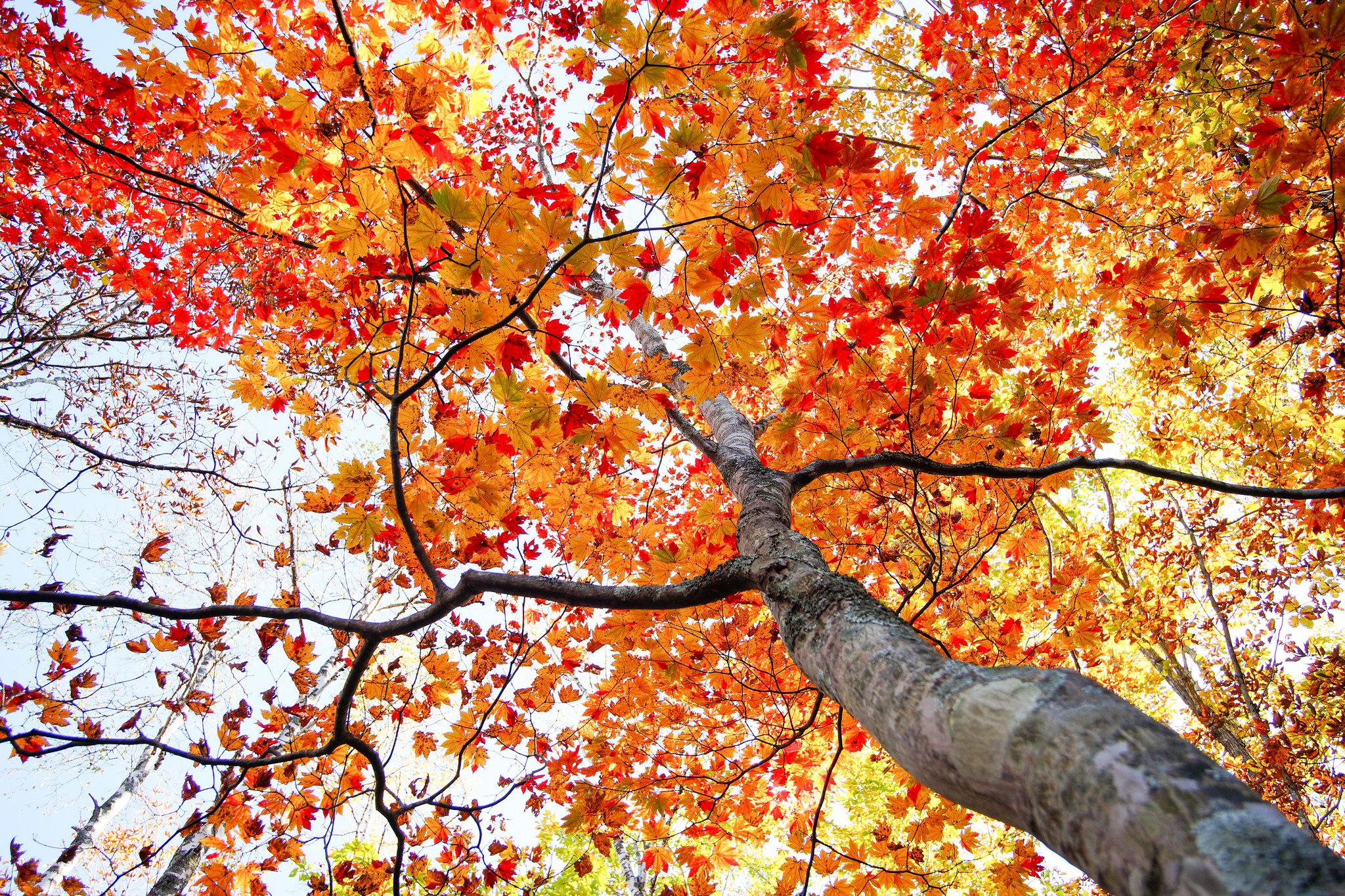 Ствол осеннего дерева бесплатно