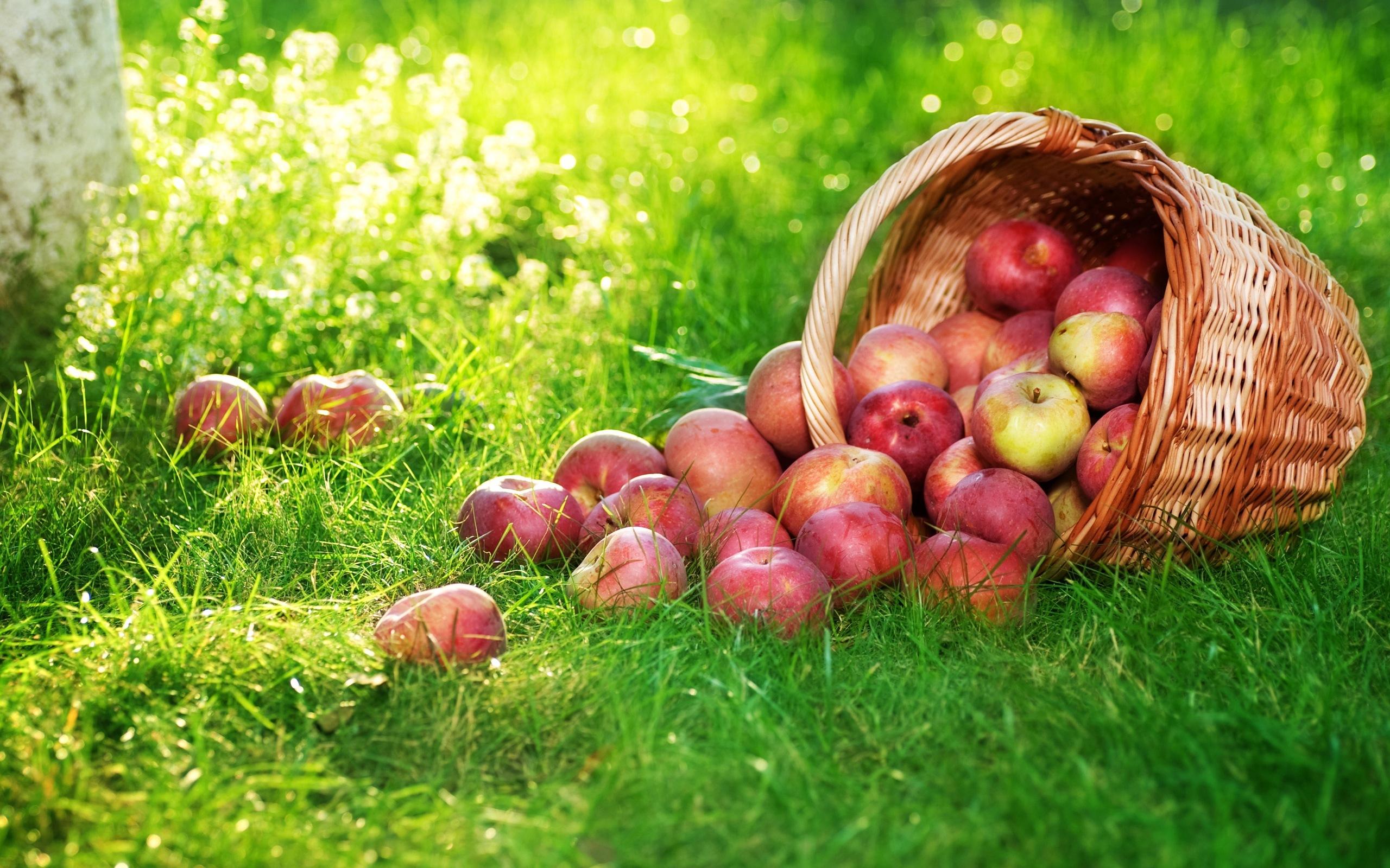 Корзина с яблоками загрузить