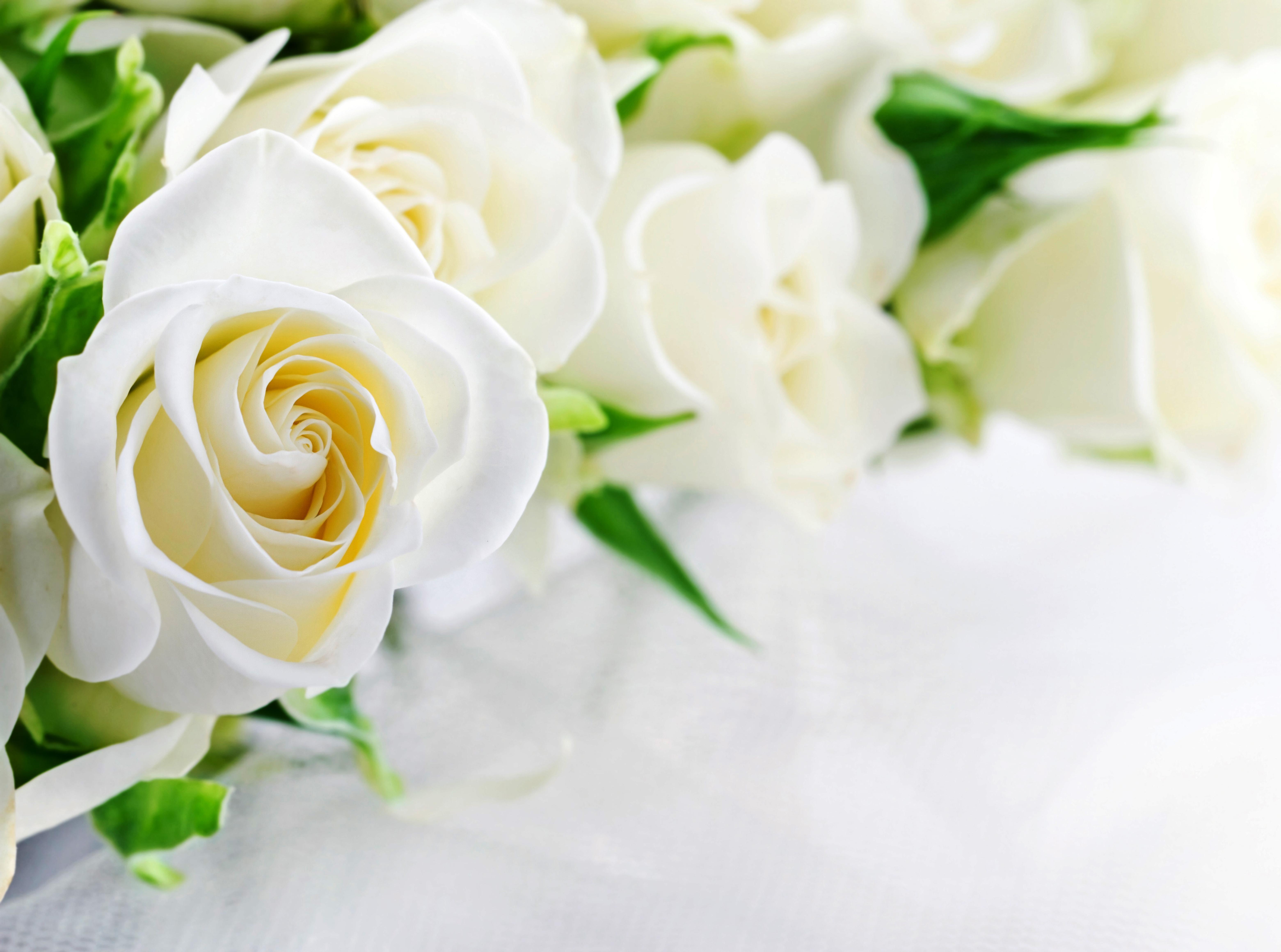 дизайне спальни белые свадебный открытки приспособлением прямохождению являются