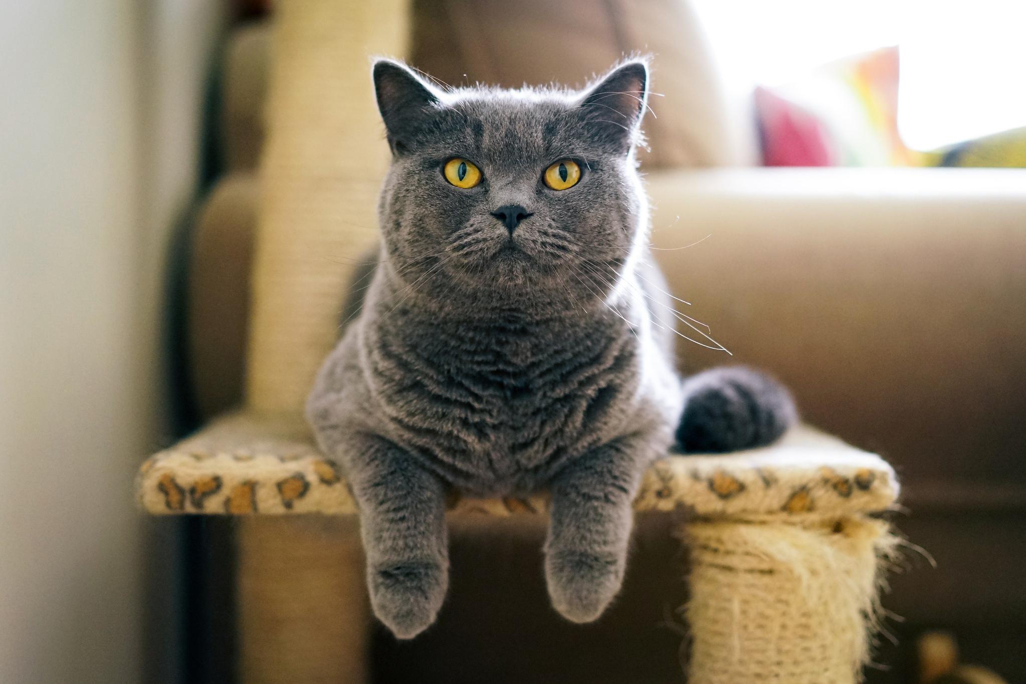 Серый кот  № 411989 без смс