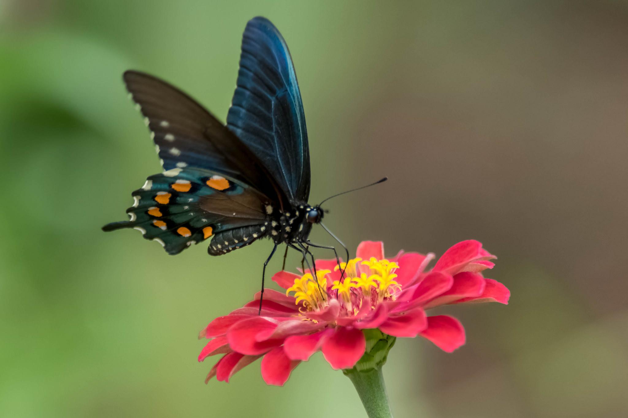 Бабочки подлетающие к цветкам  № 2991750  скачать