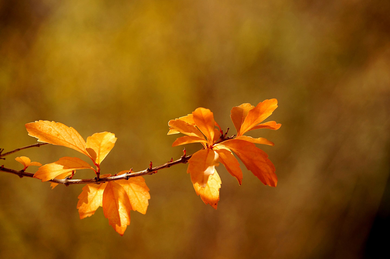 осенние деревья ветка картинки области хирургии несут