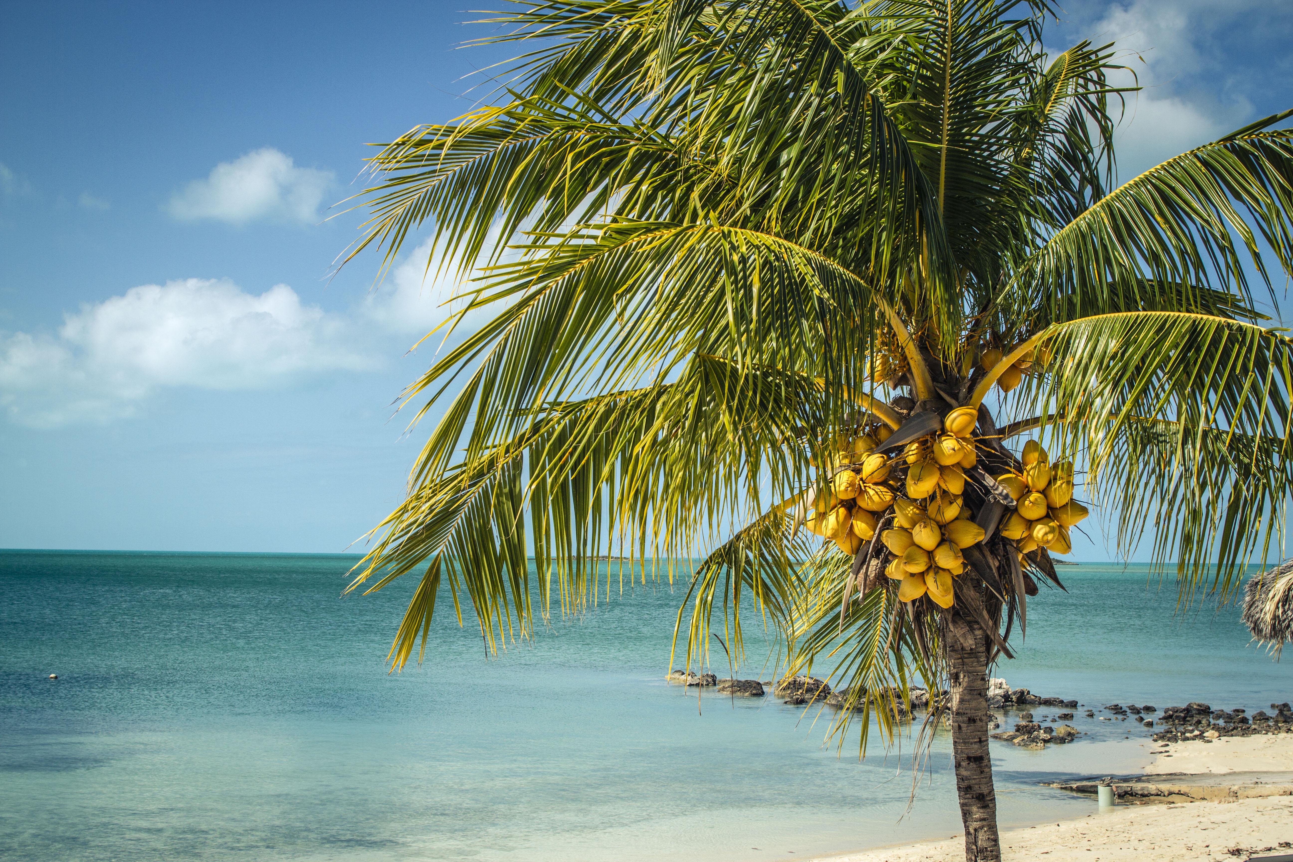 требуется, выдели картинка море с пальмами большого разрешения цветочные цветочная