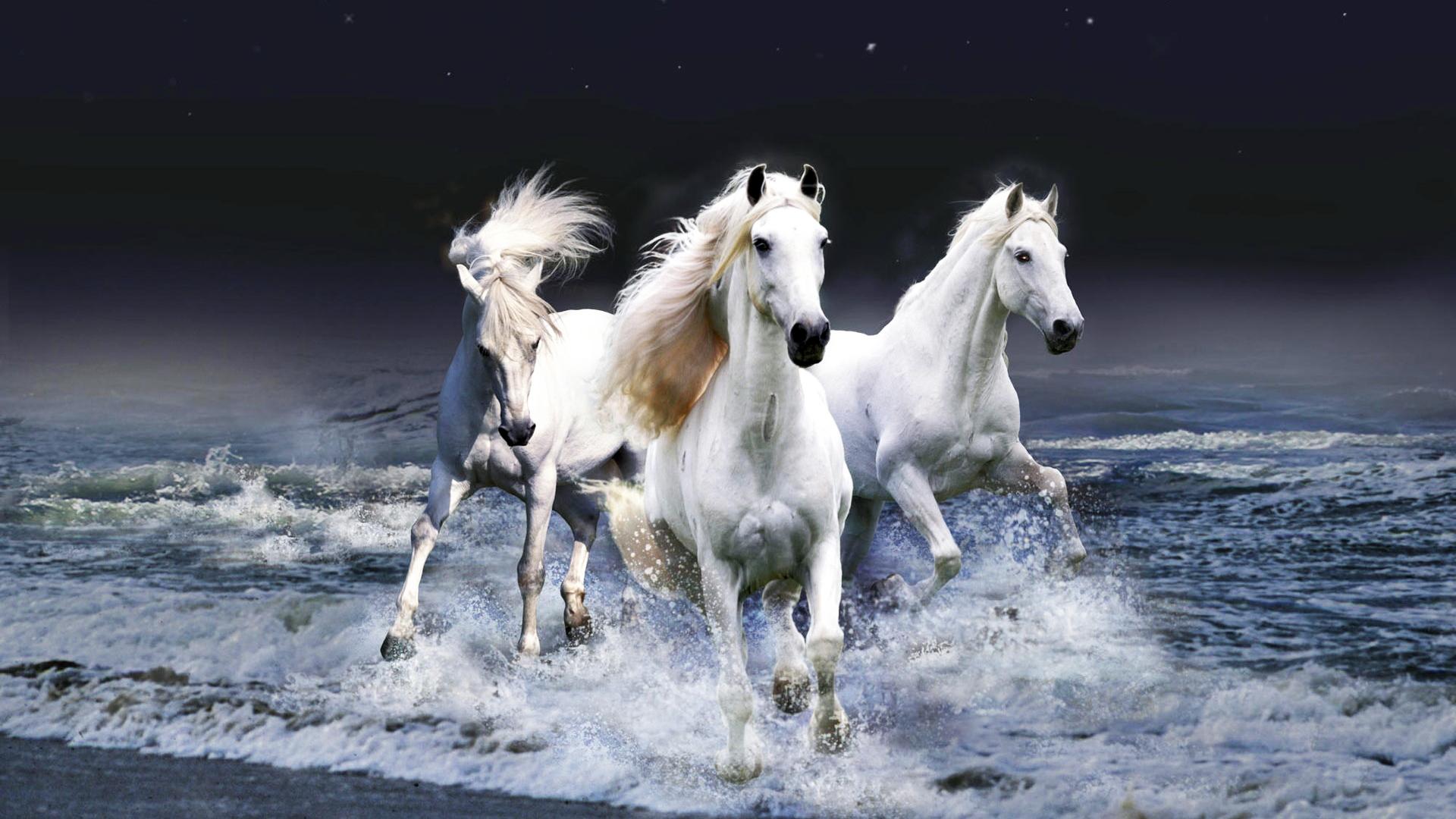 Три белые лошади скачать
