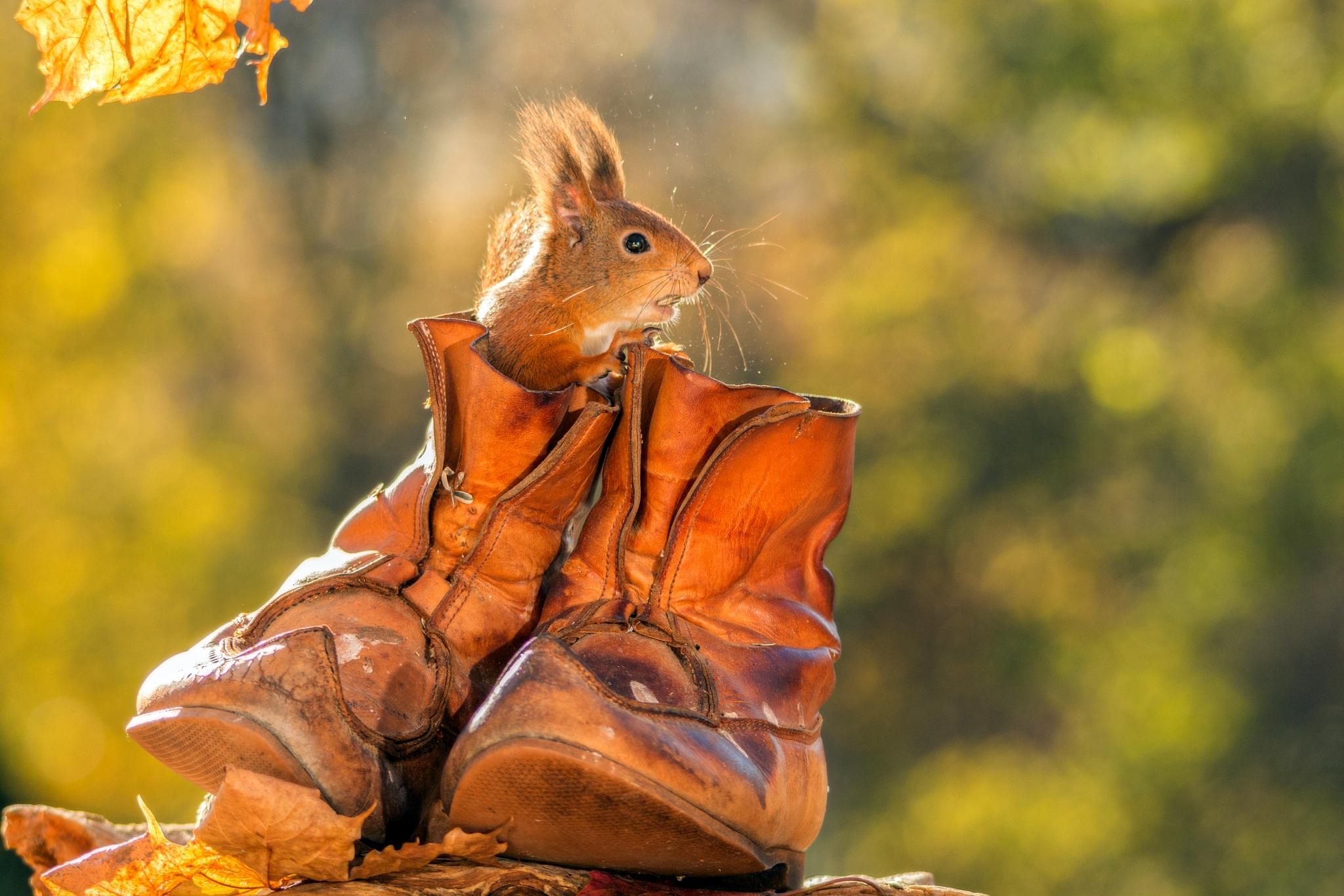 Фон для, прикольные животные осенью