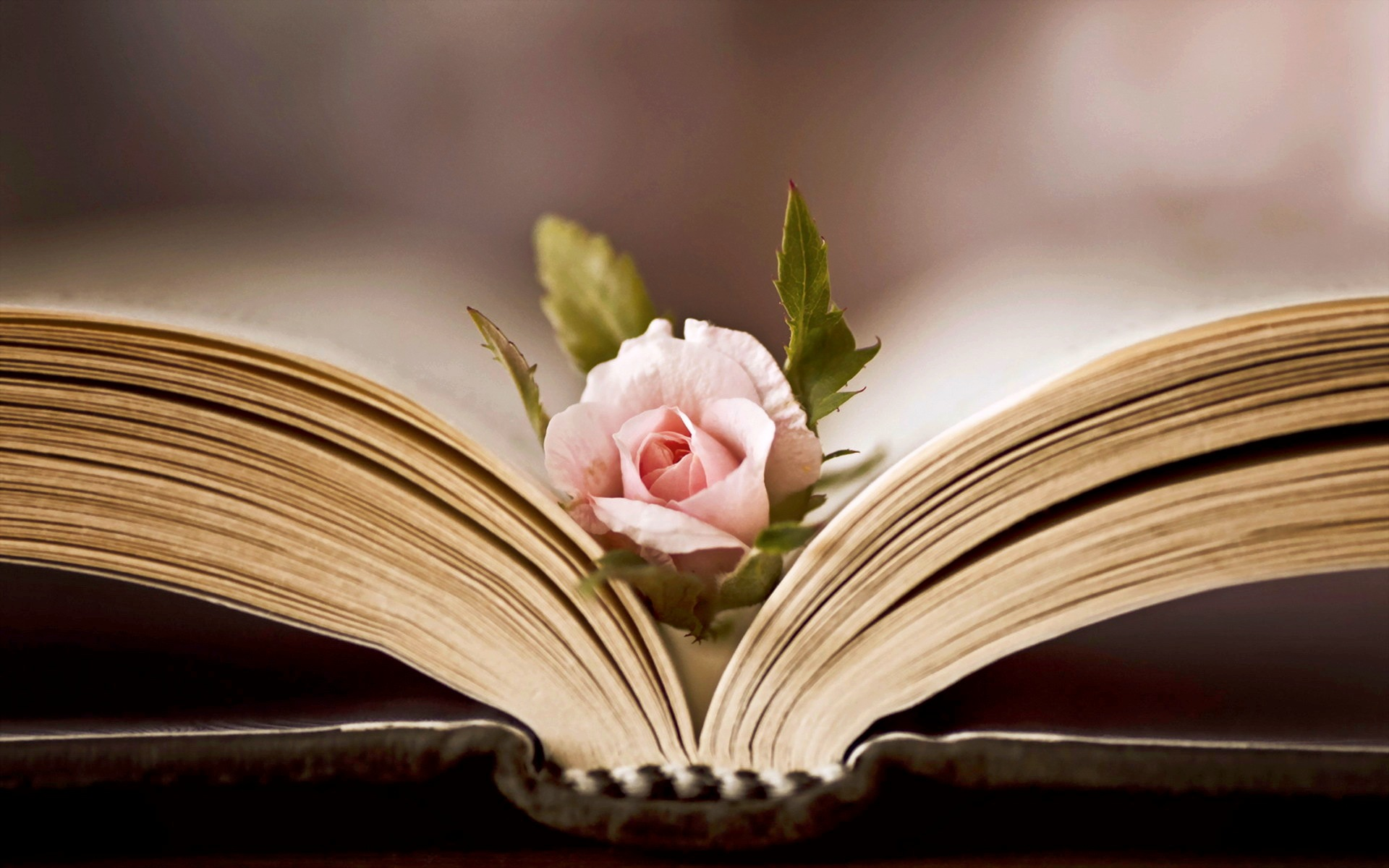 обои на рабочий стол цветы книги № 648758 загрузить