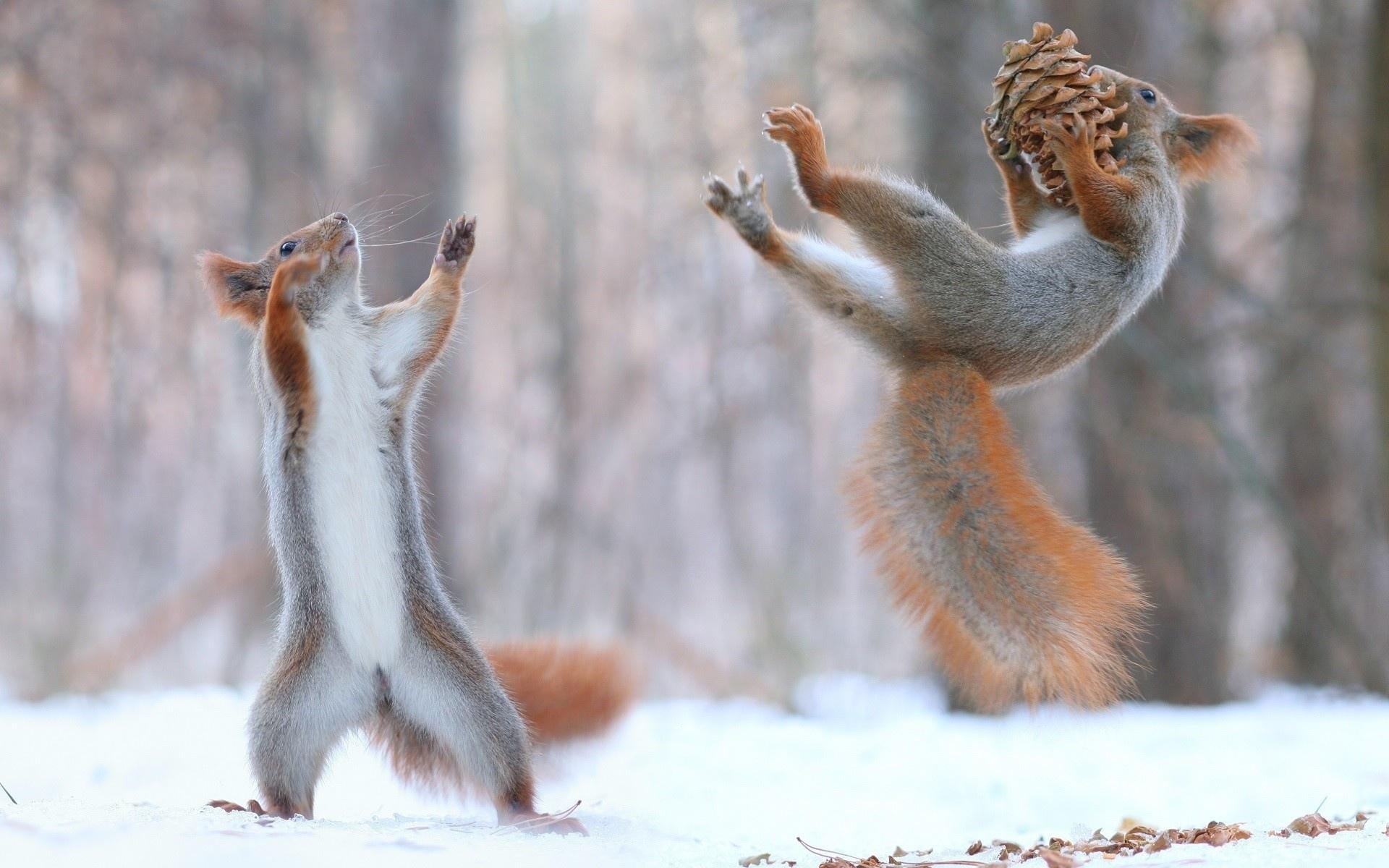 Открытка галине, смешные картинки зима
