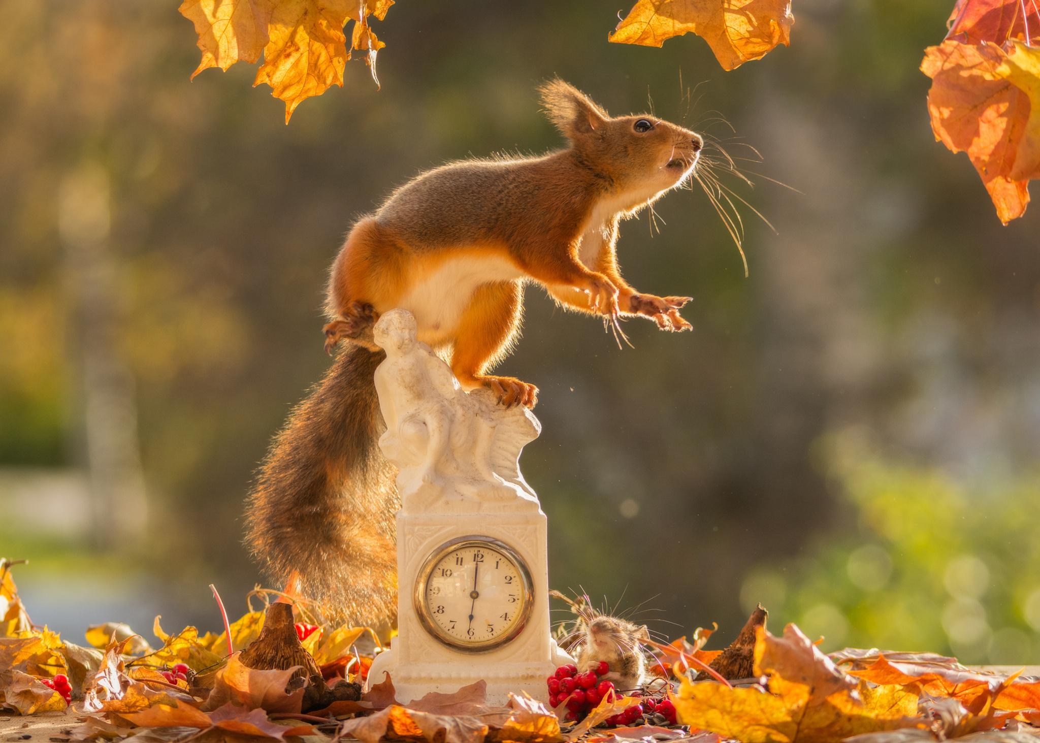 природа животные кролик листья осень деревья  № 2035324 бесплатно