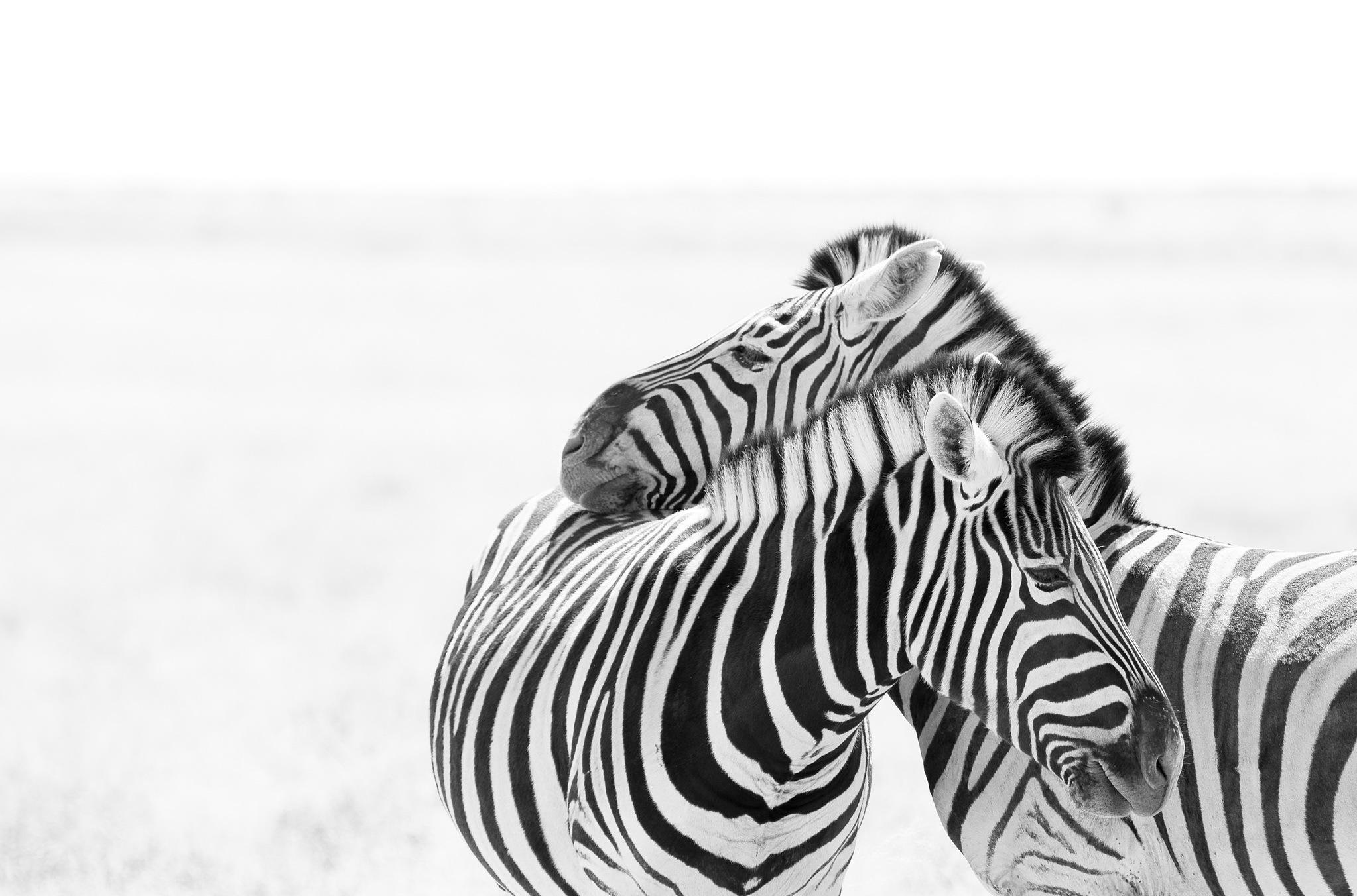 термоэтикетки для zebra