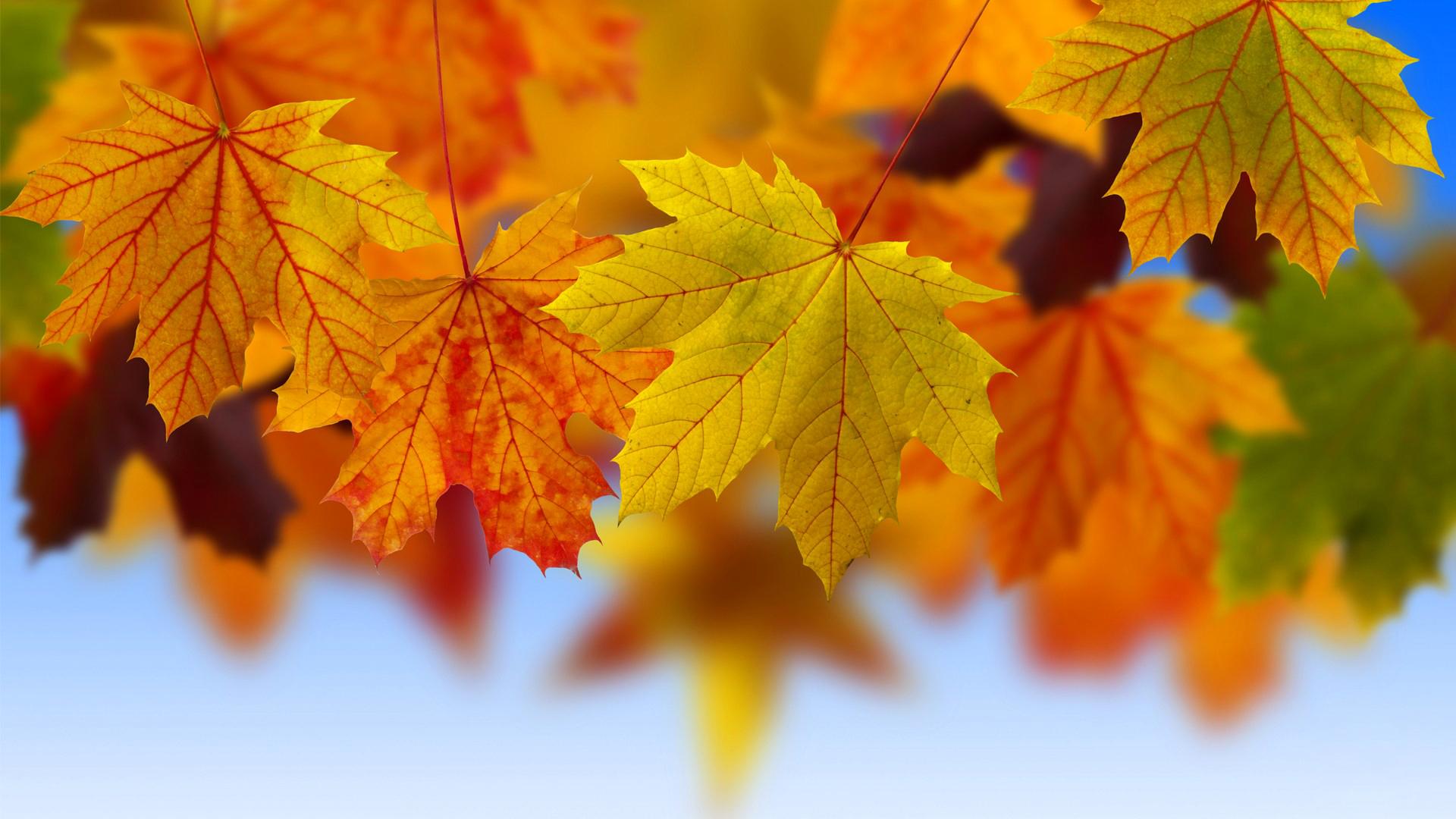 Открытки листья осень, самые