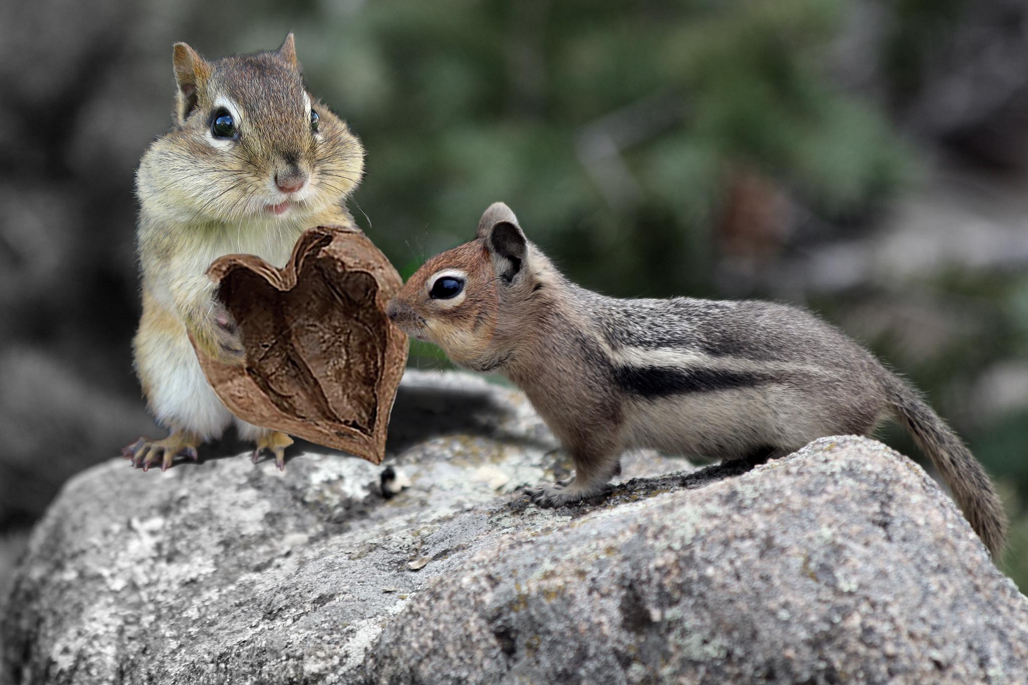 Днем, картинки двух животных смешные
