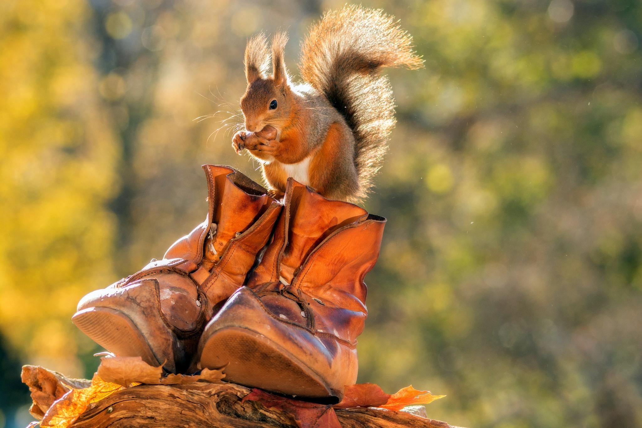 Смешные картинки на осень