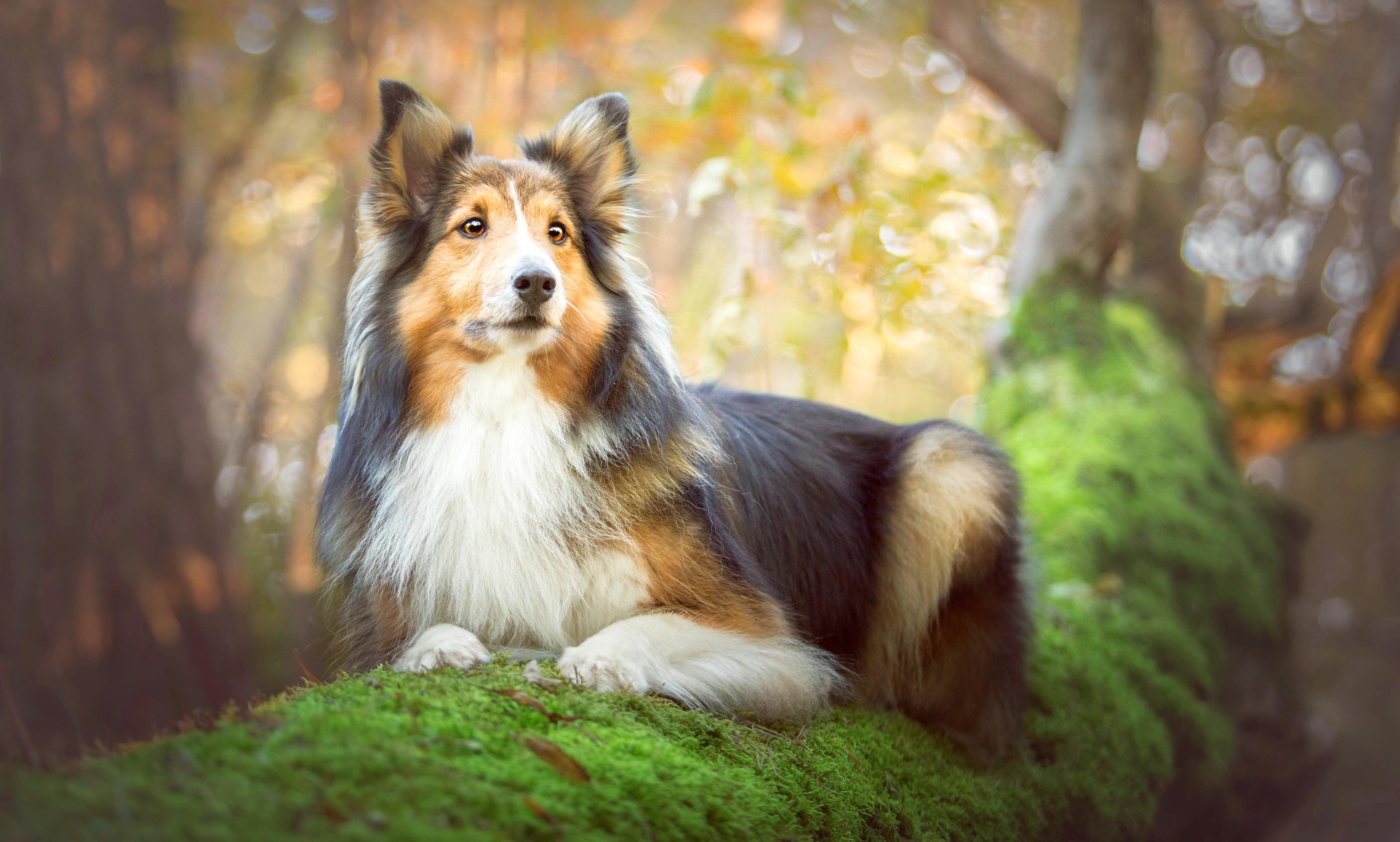 пёс язык собака на бревне  № 2524098 бесплатно