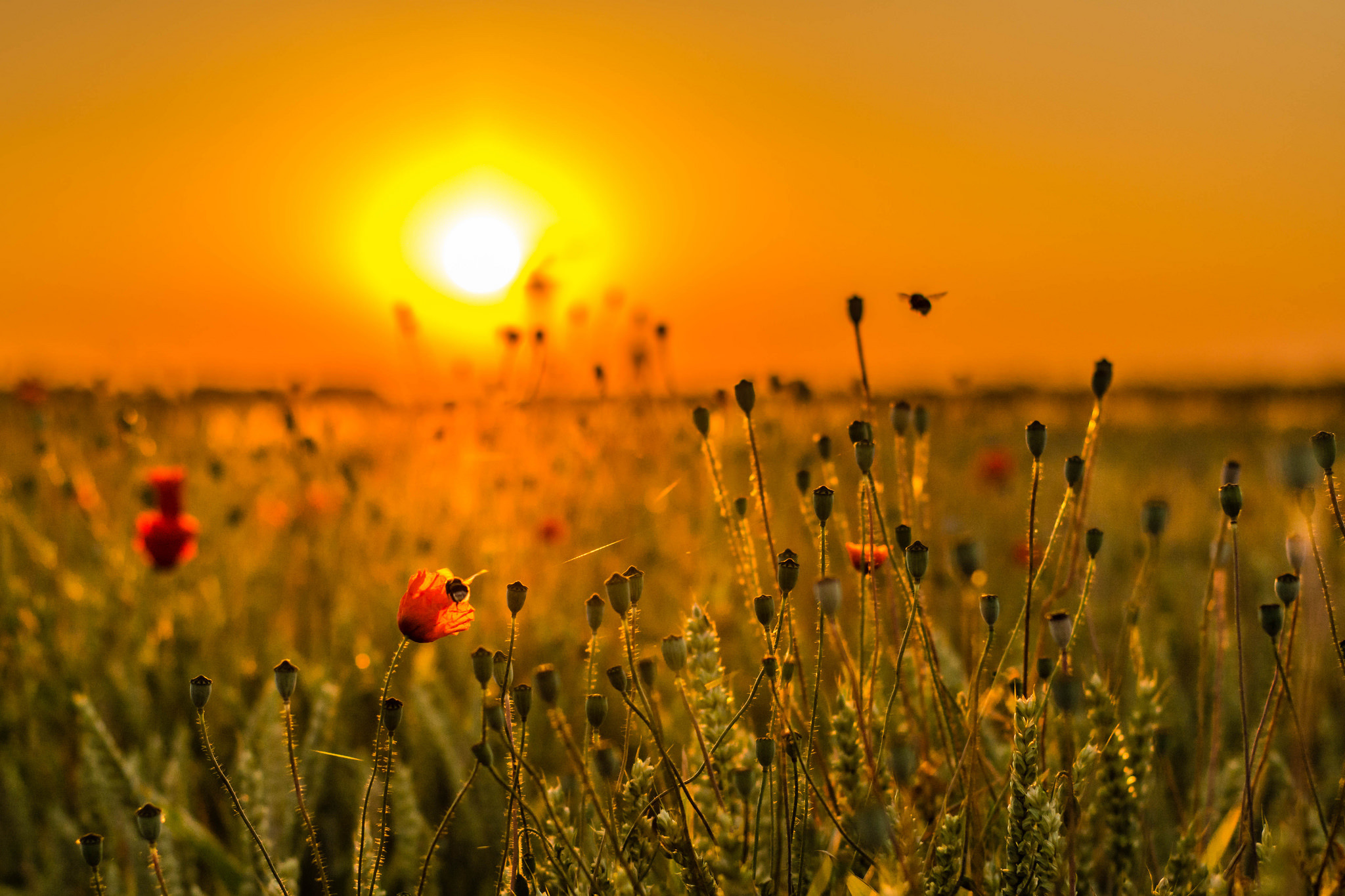 цветочная поляна небо закат скачать