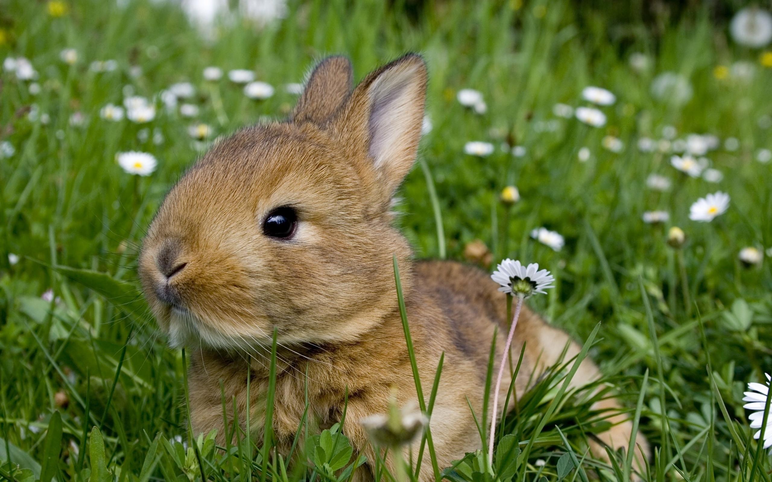 кролик трава  № 1964053 бесплатно