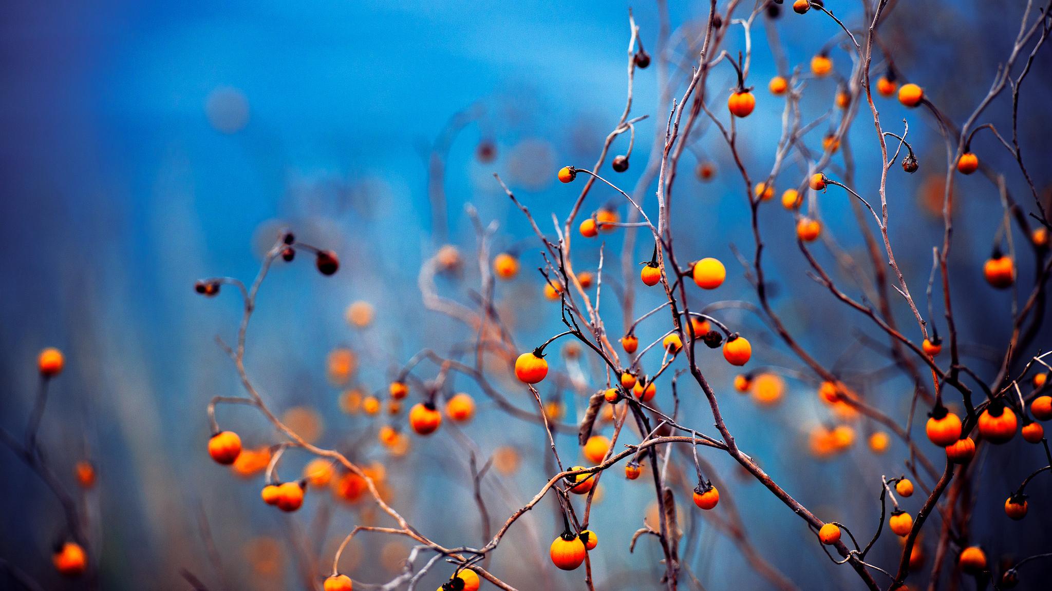 Осенние ветви загрузить